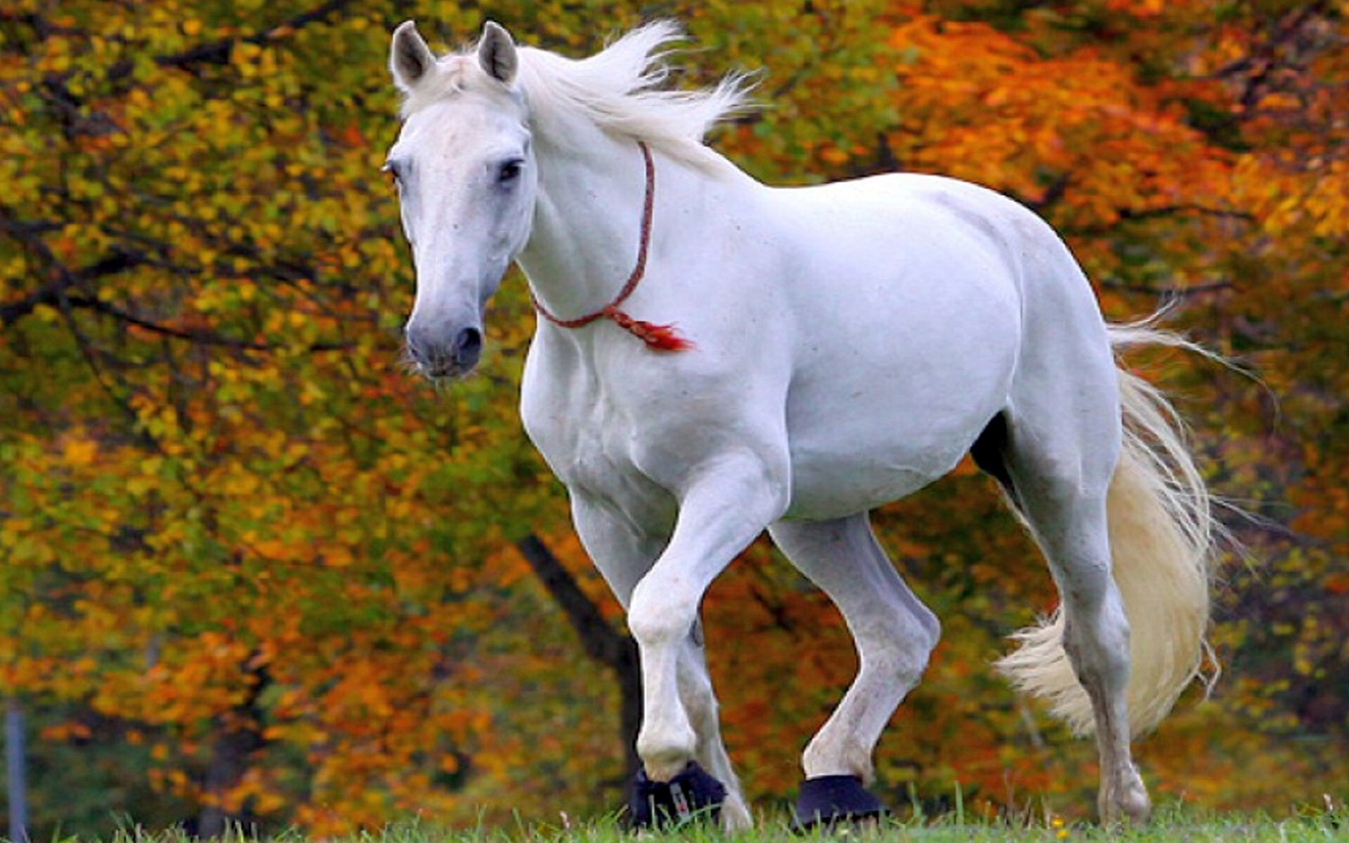 Simple Wallpaper High Resolution Horse - White_Horse_Wallpaper  Perfect Image Reference_909126.jpg