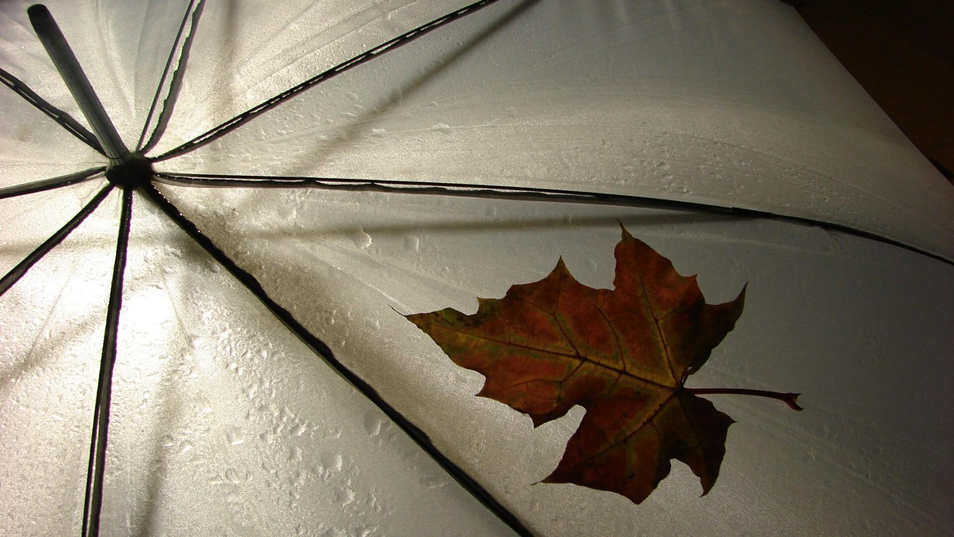 Leaf On Umbrella Rain Wallpaper Hd Wallpapers