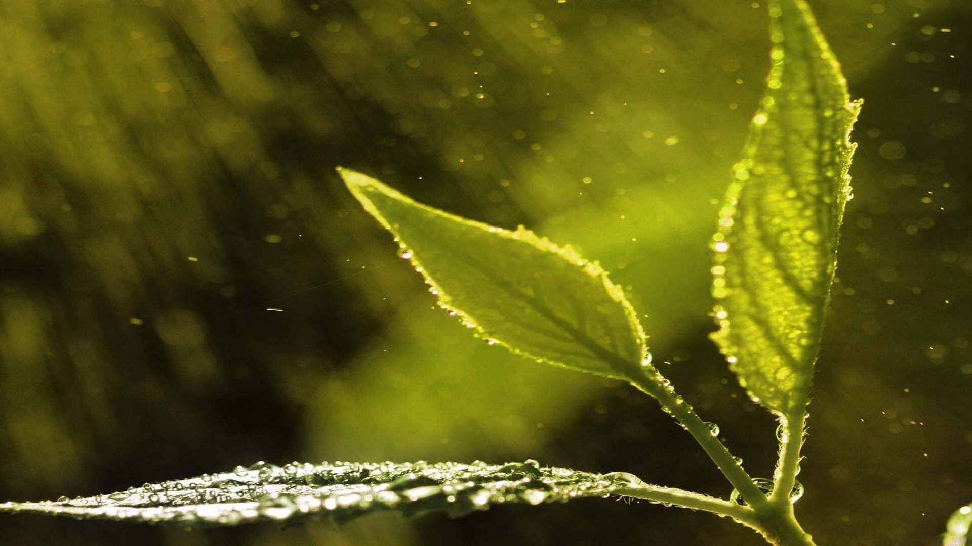 nature rain drops on leaves image hd wallpapers