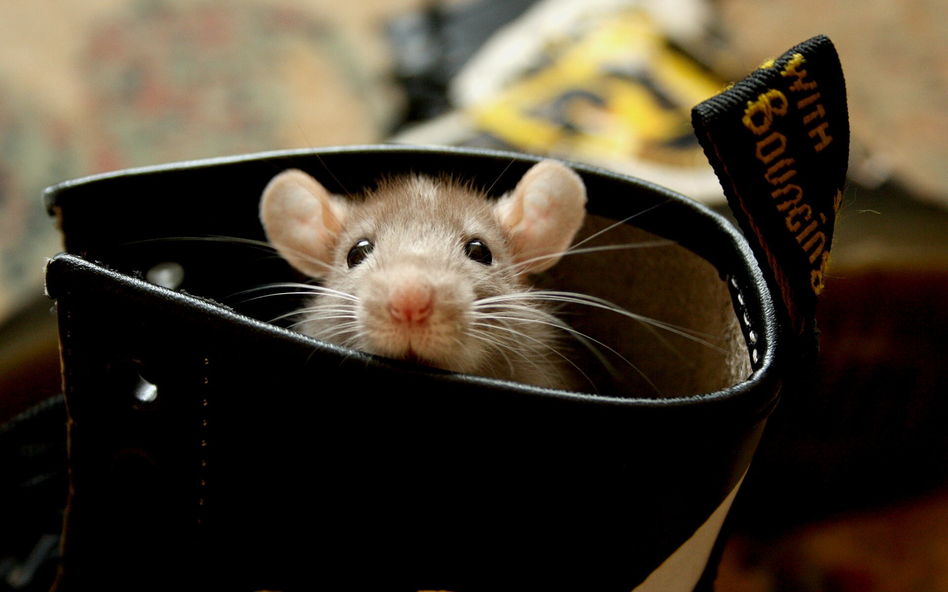 Beautiful Cute Mouse In Shoes Wallpaper Free Download