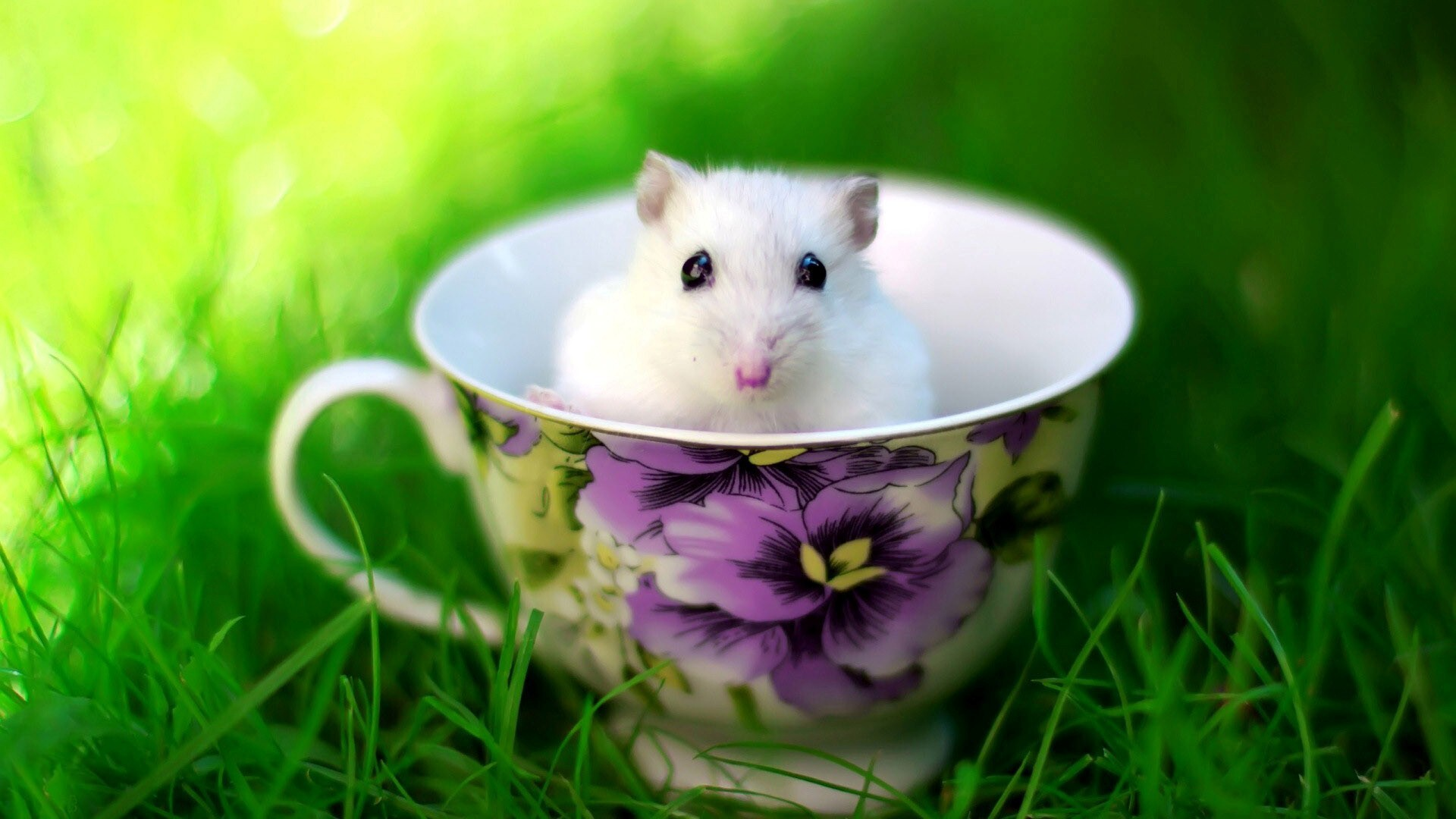 Cute white rat baby in cup hd wallpapers - Free funny animal screensavers ...