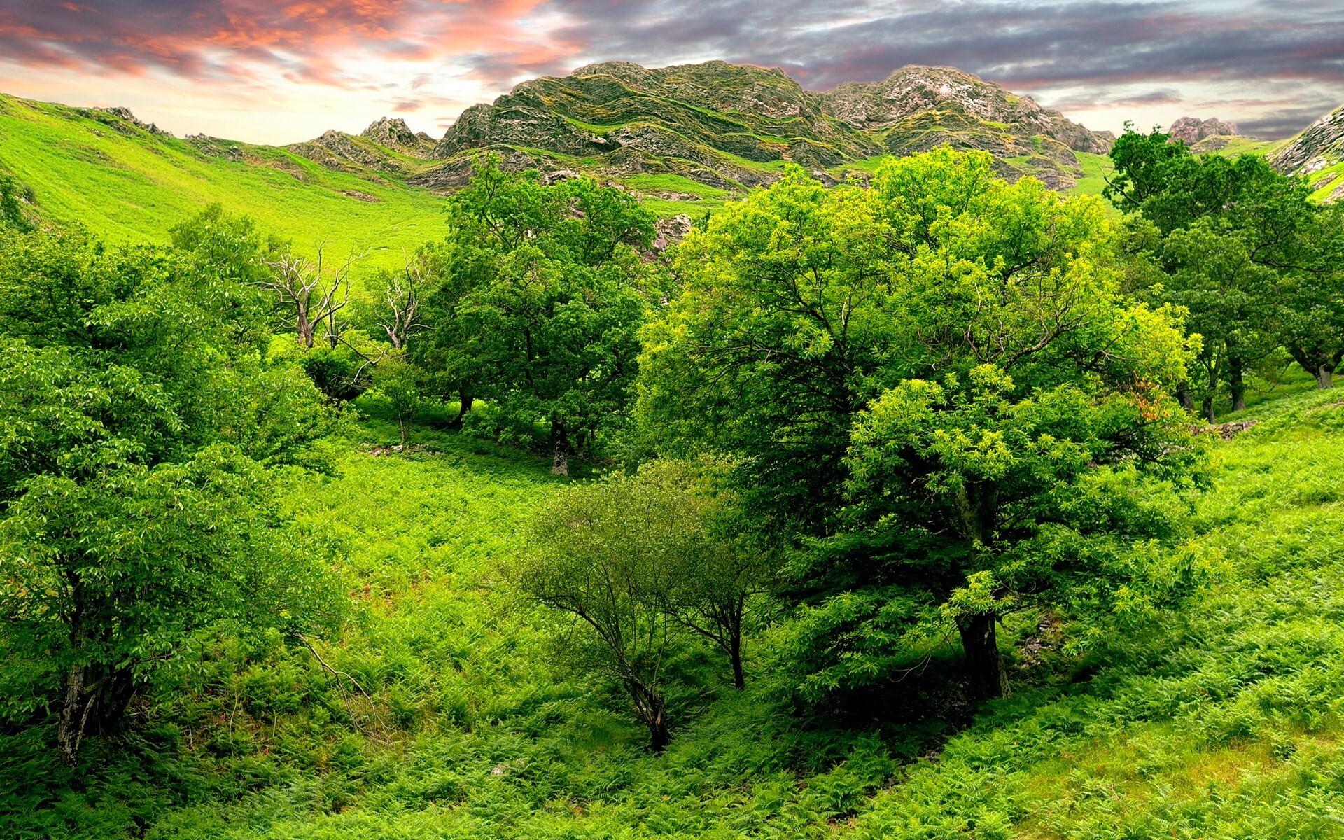 Beautiful Green Nature Pic Hd Wallpapers
