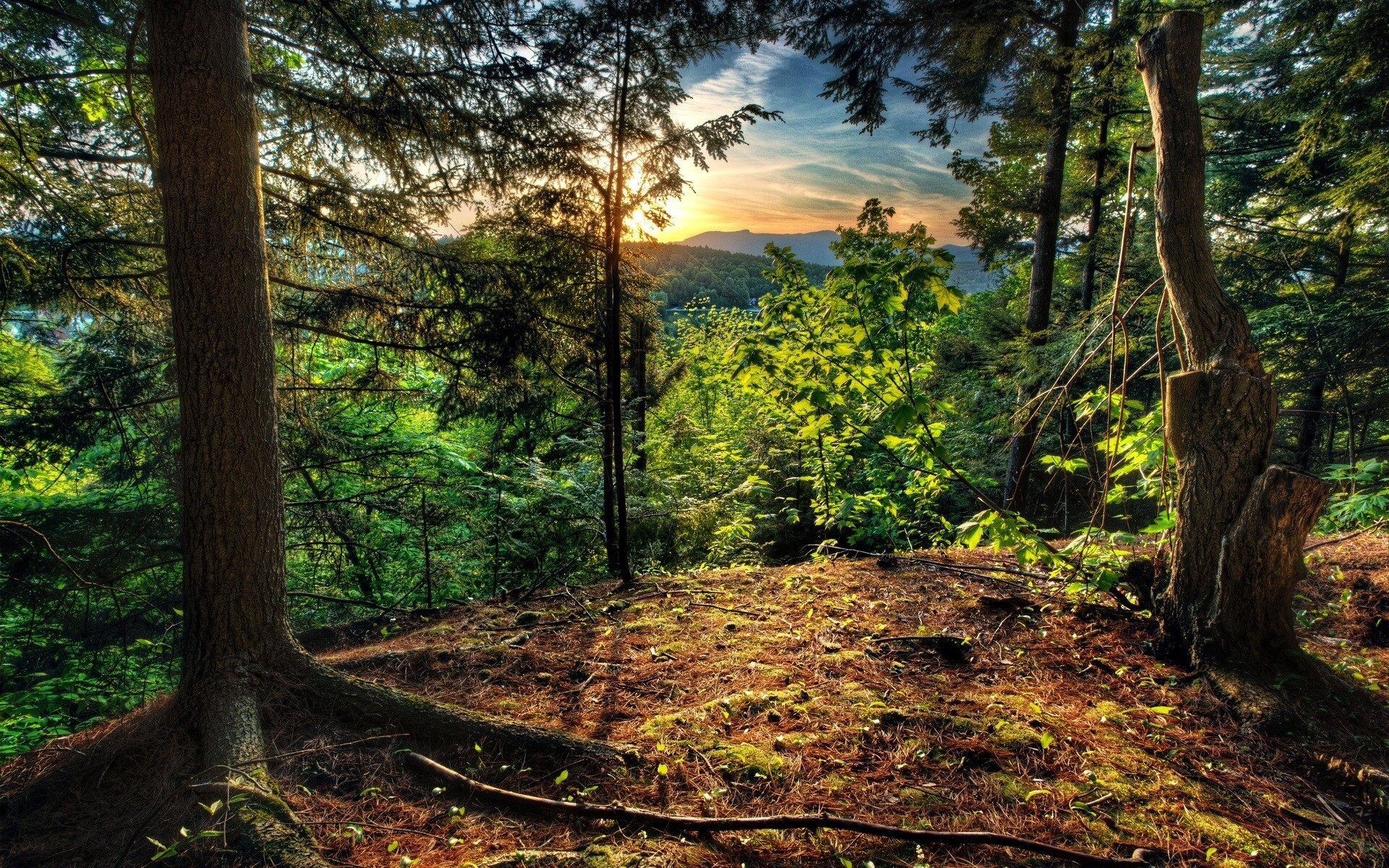 Big Beautiful Nature Green Forest Images