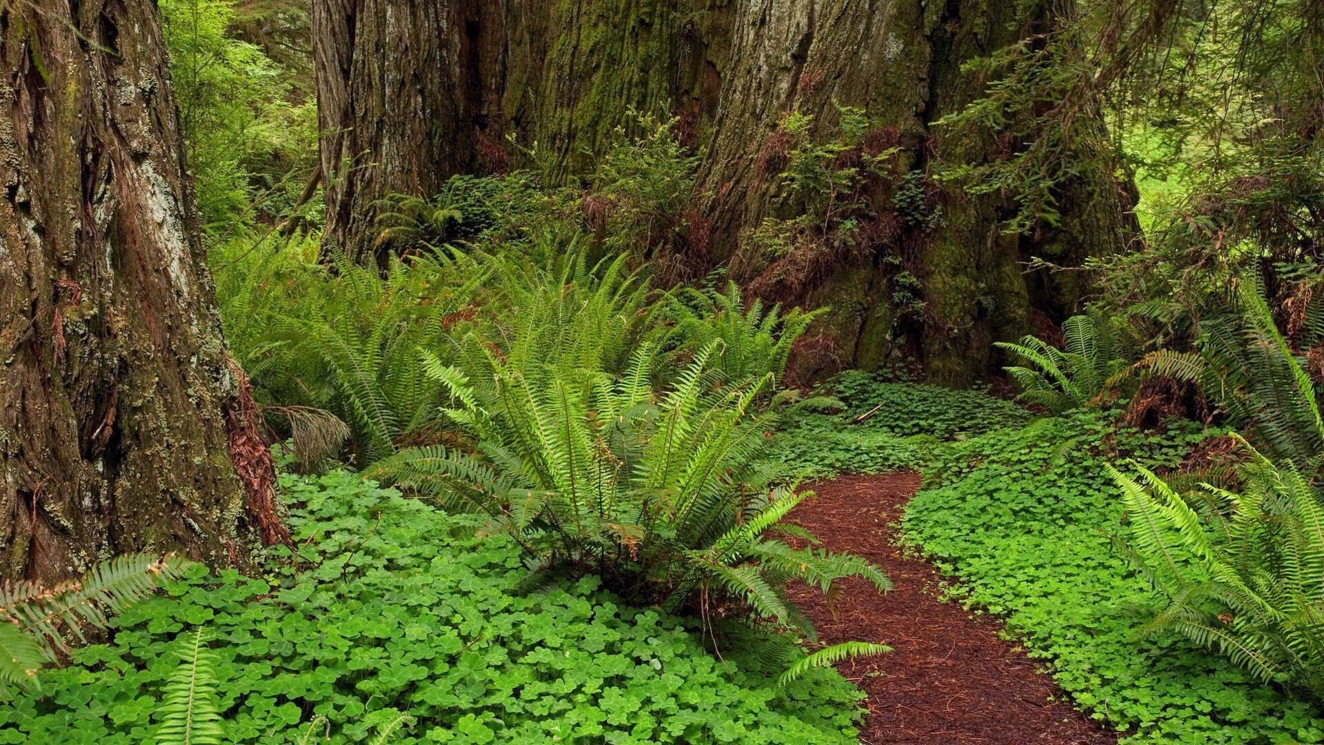 Green Forest Nature Image