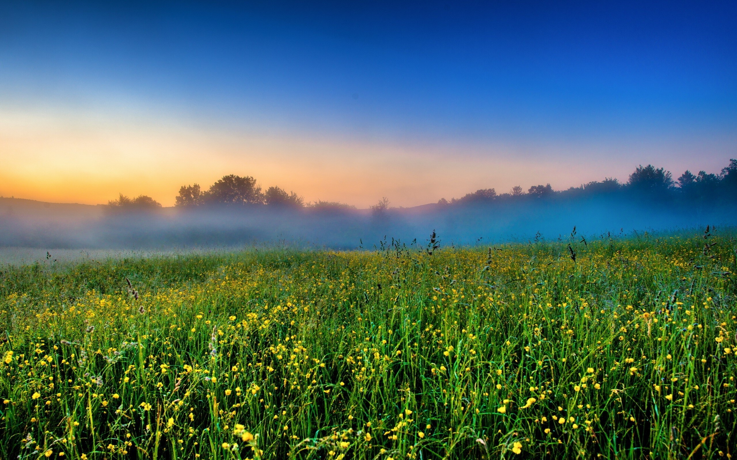 Nature Foggy Field Farm Nice Wallpapers