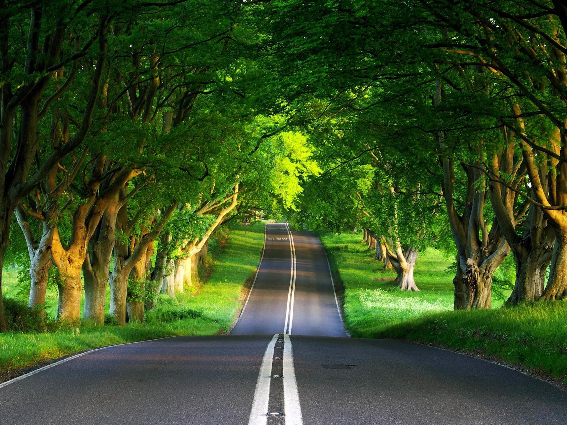 road between nature view | hd wallpapers