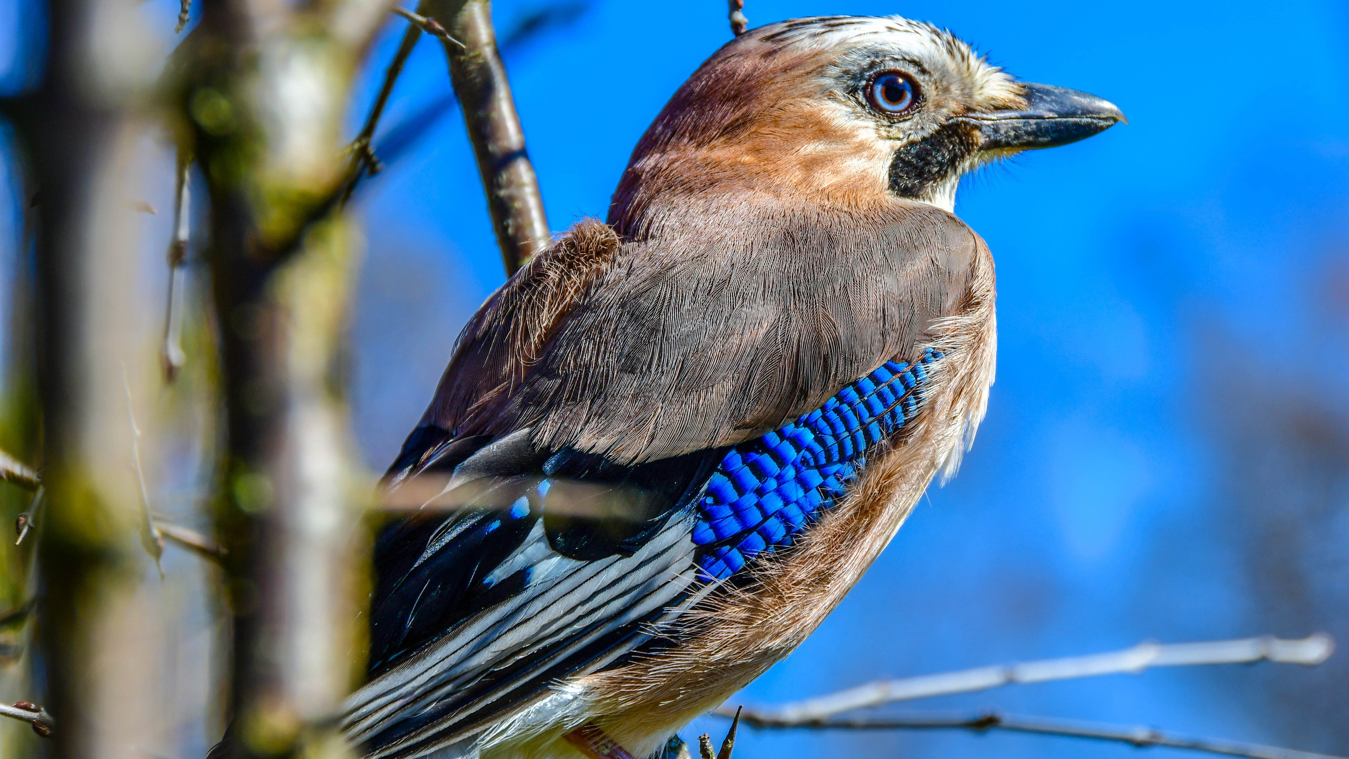 Bird With Blue Feather 5k Photo Hd Wallpapers