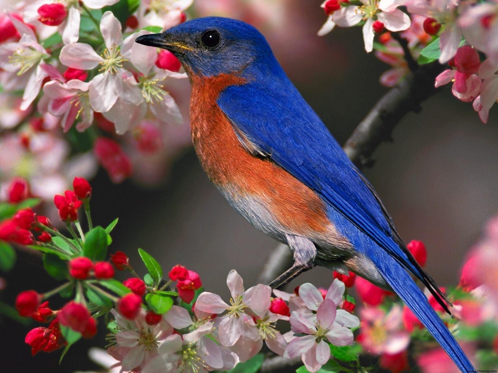 Blue Bird In Tree Hd Wallpapers