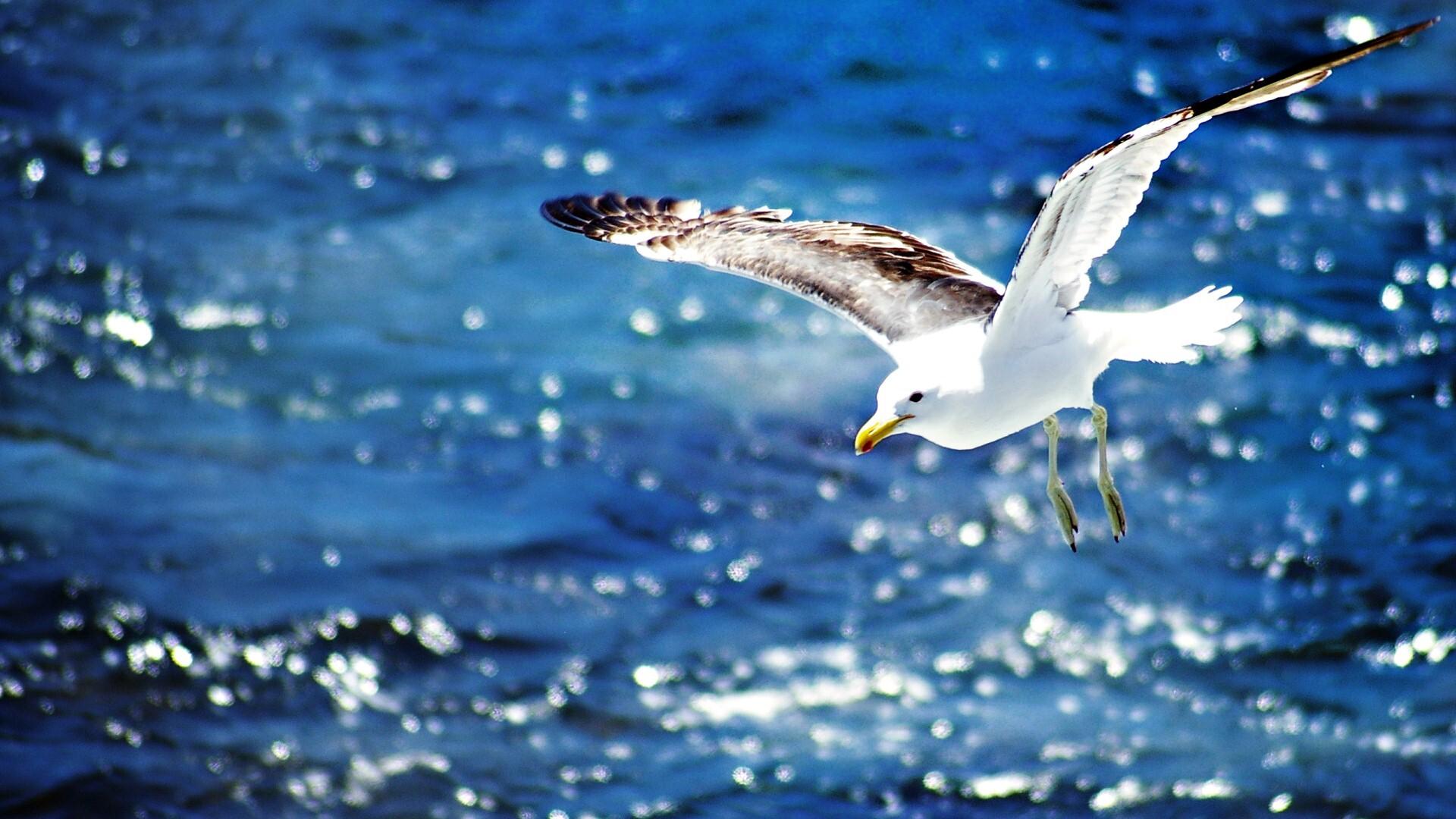 Beautiful Seagull Desktop Wallpaper Hd 3840x2160