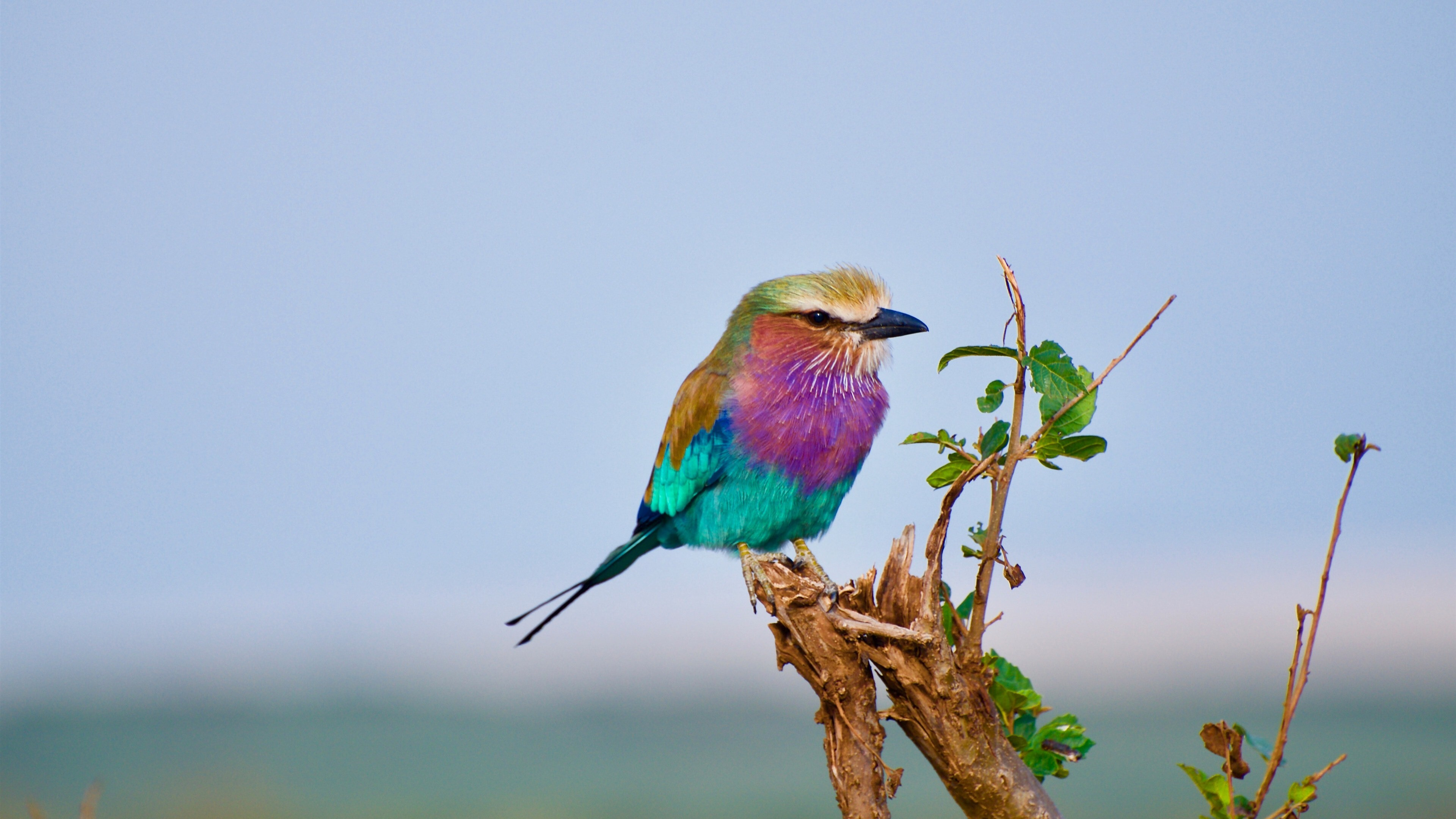 Small Colorful Bird 4K Photo | HD Wallpapers