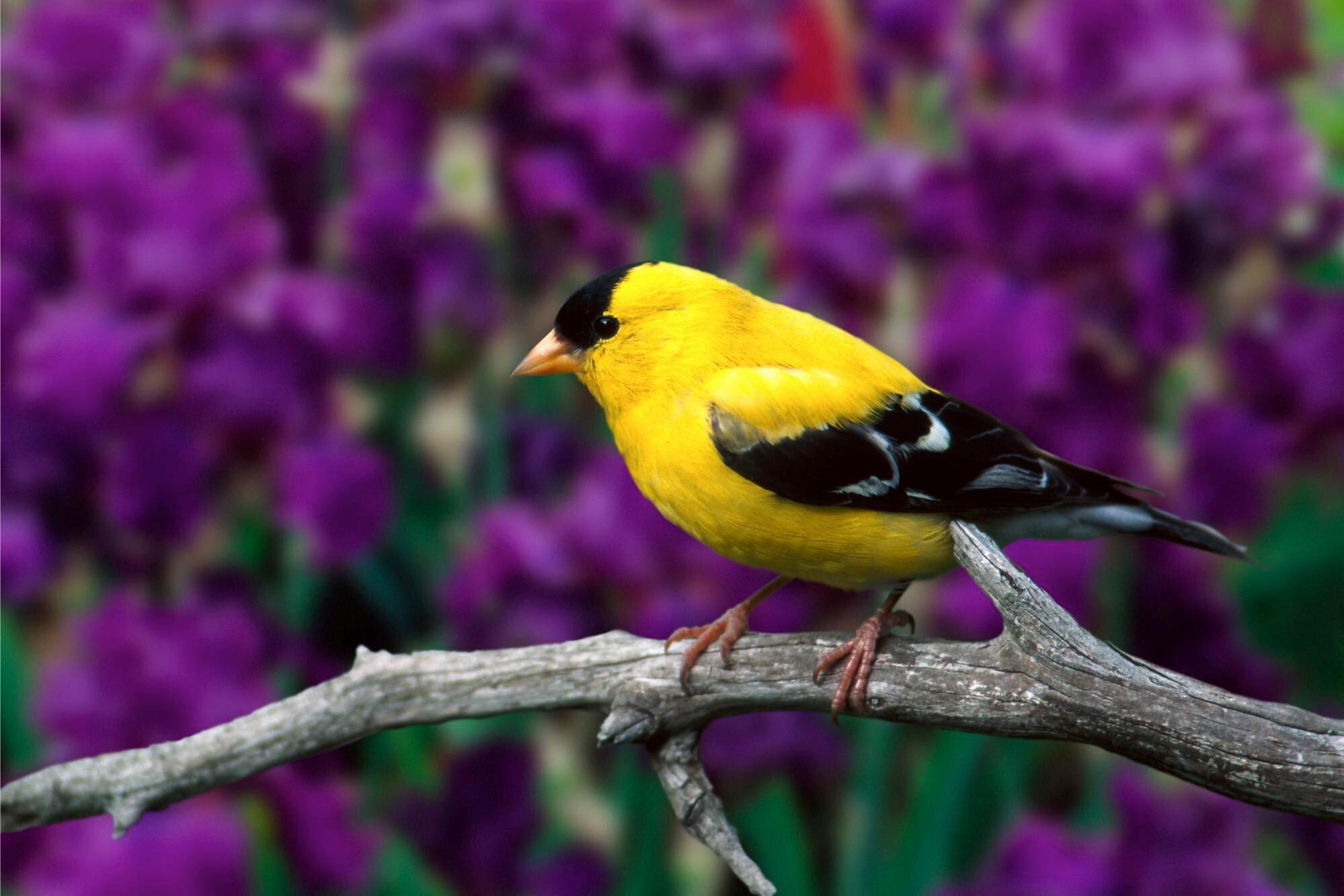 bird wallpapers | free download beautiful colorful hd desktop images