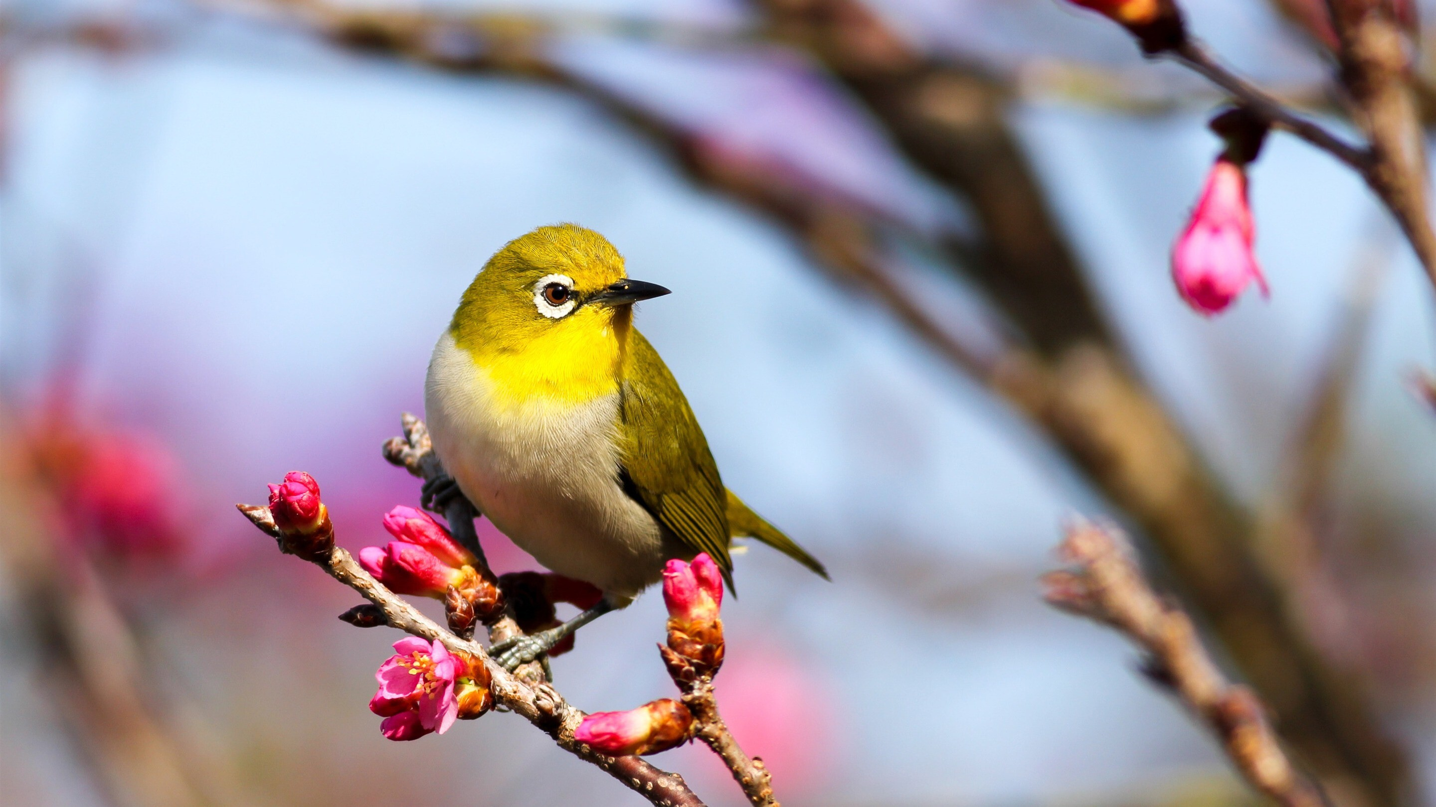 Yellow Bird HD Pictures | HD Wallpapers