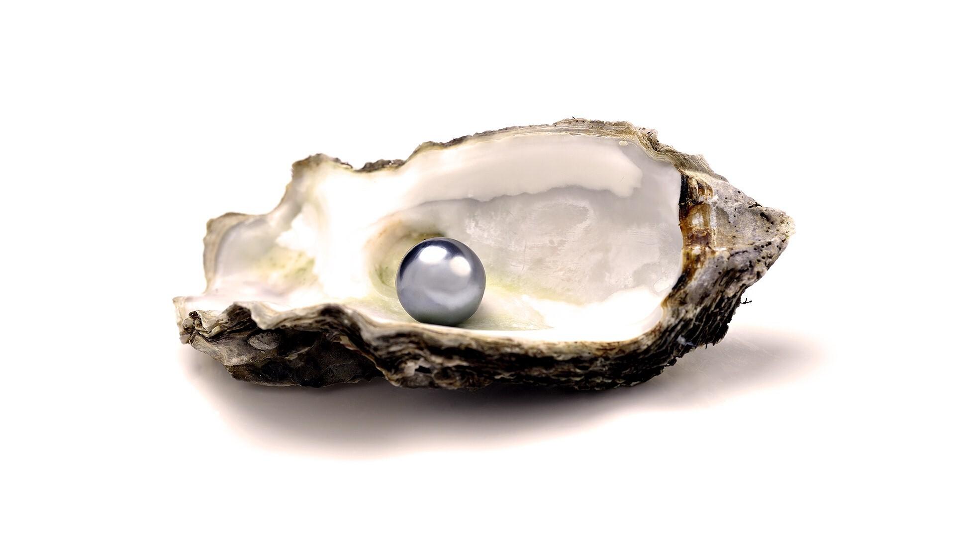 Beautiful Pearl in Sea Shell | HD Wallpapers