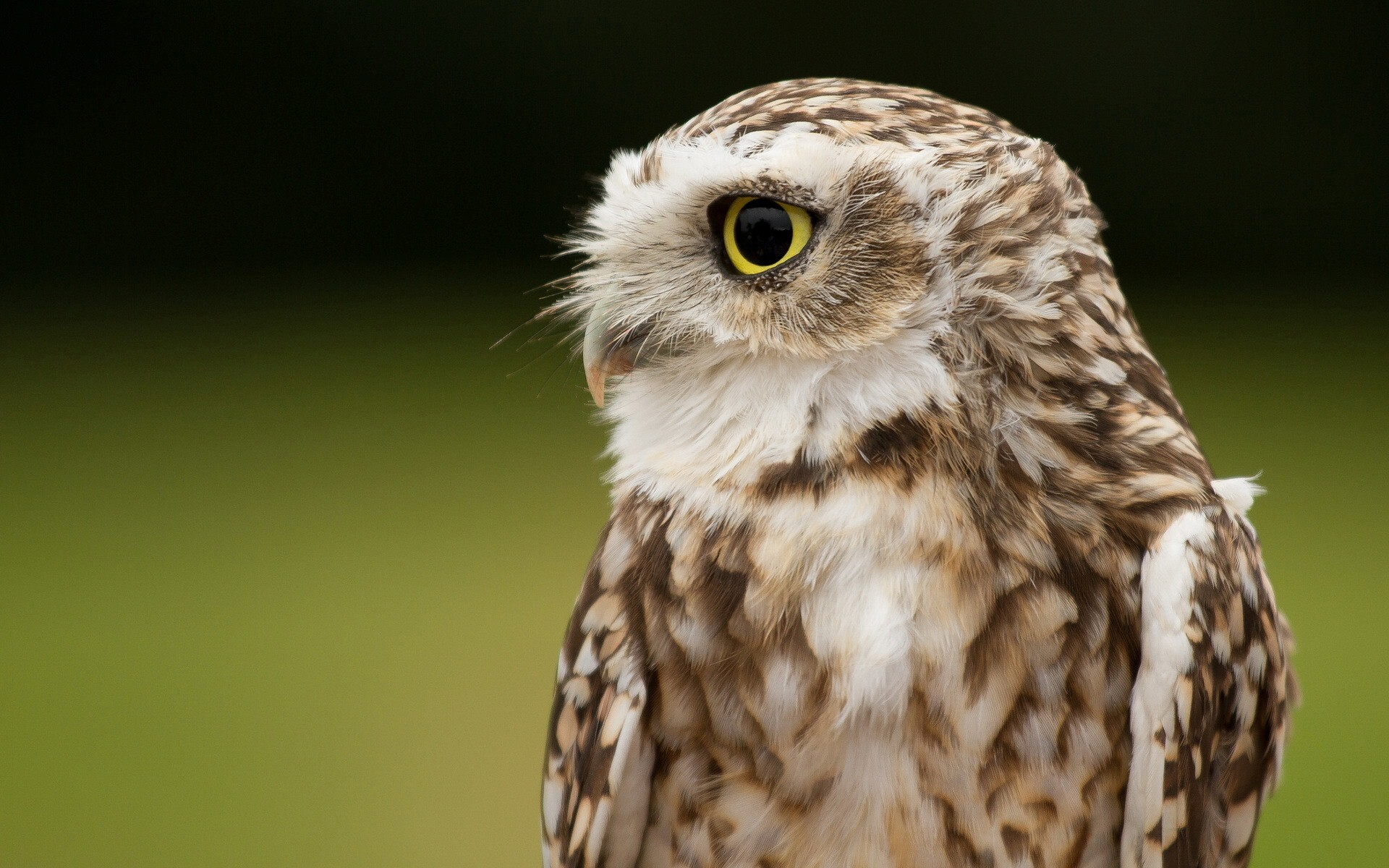 Killing Eye of Owl Bird Photo | HD Wallpapers - photo#16
