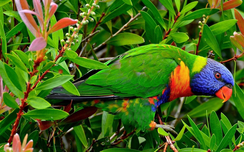 Beautiful Multicolor Parrot Seating In Garden Wallpaper Hd Wallpapers