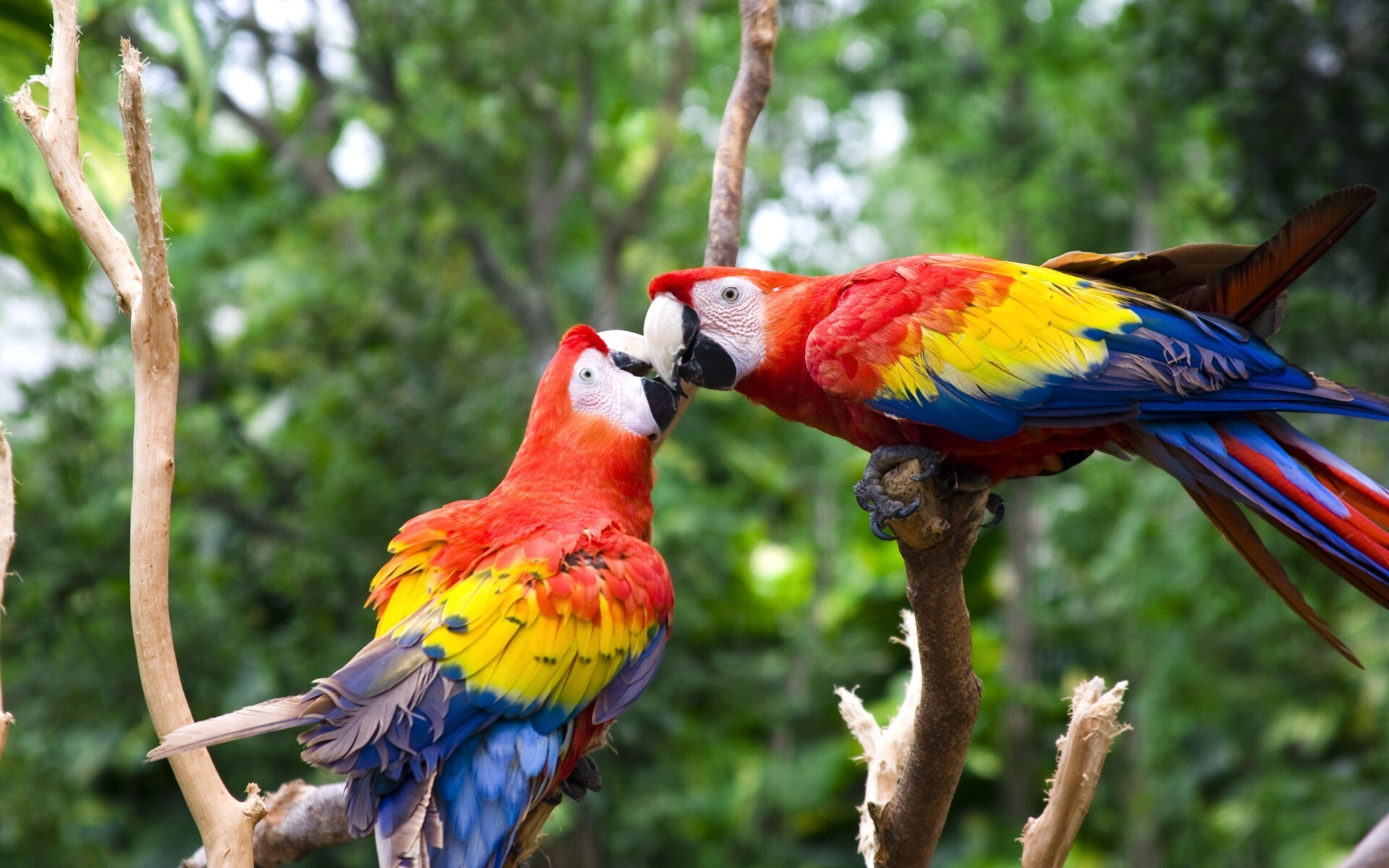 Cute Love Bird Colorful Parrot HD Wallpapers