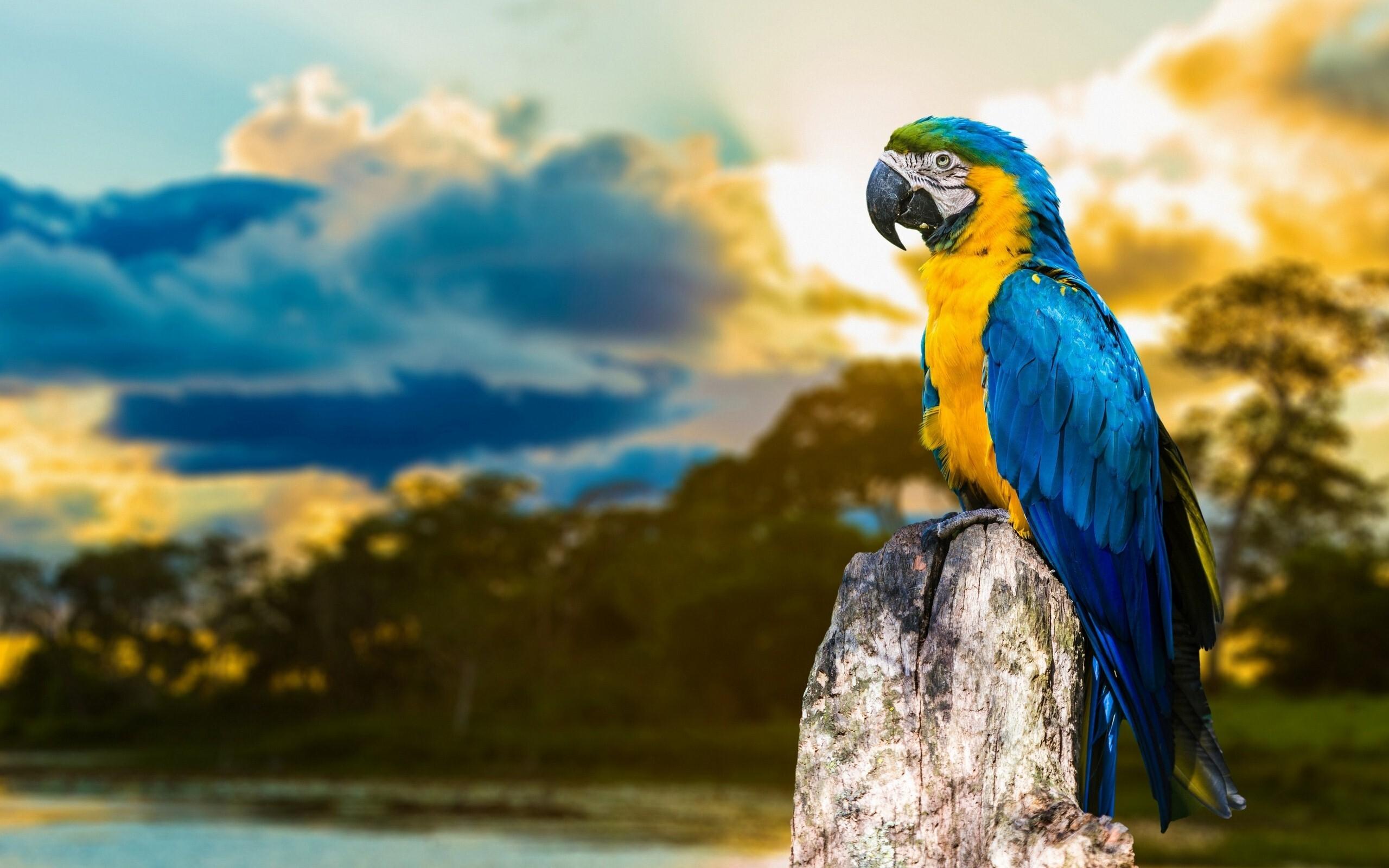 Parrot wallpapers free download colorful birds hd desktop images parrot wallpapers voltagebd Images