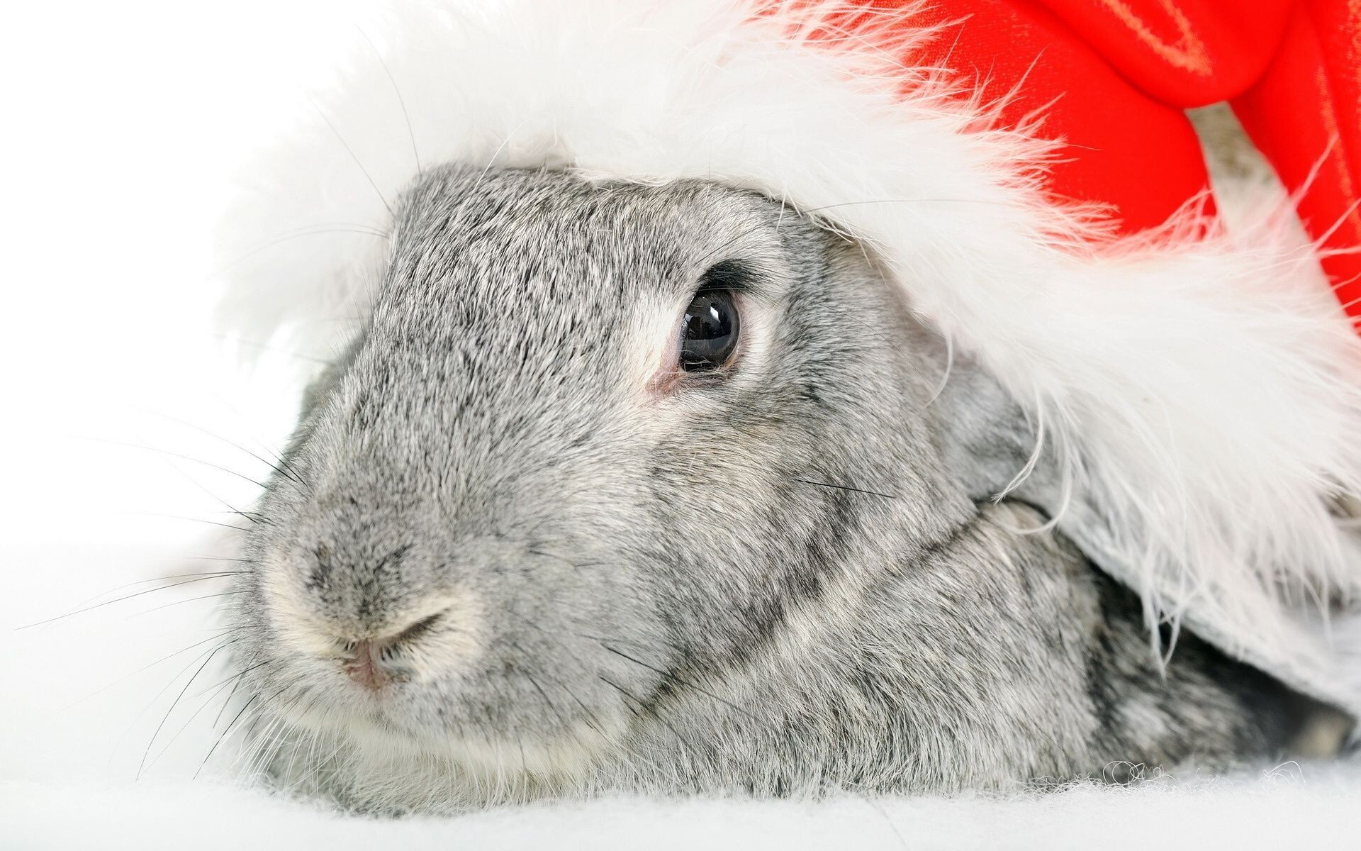 Christmas Rabbit Wallpaper Hd Wallpapers