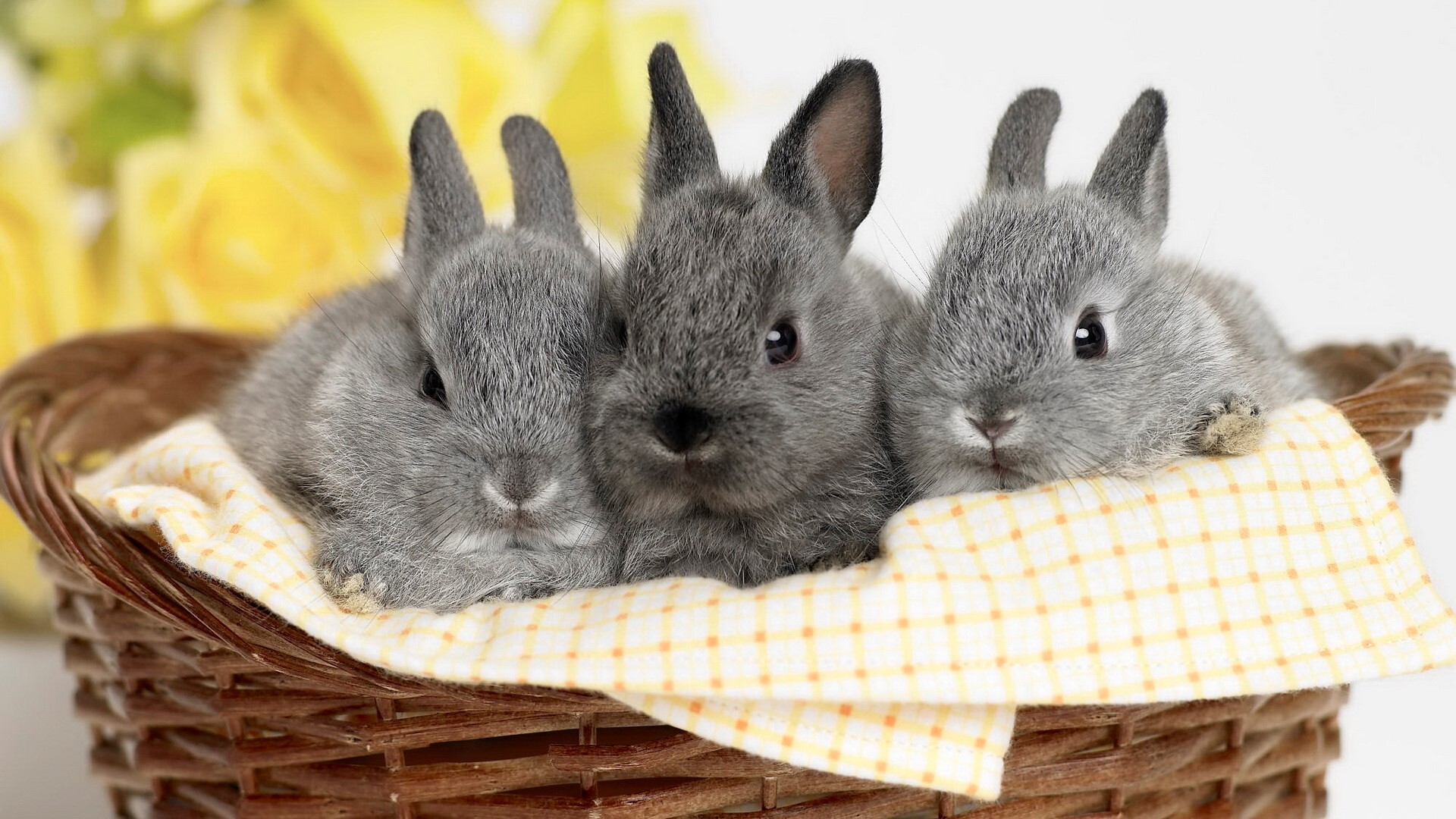 three cute hd rabbit wallpapers free download | hd wallpapers