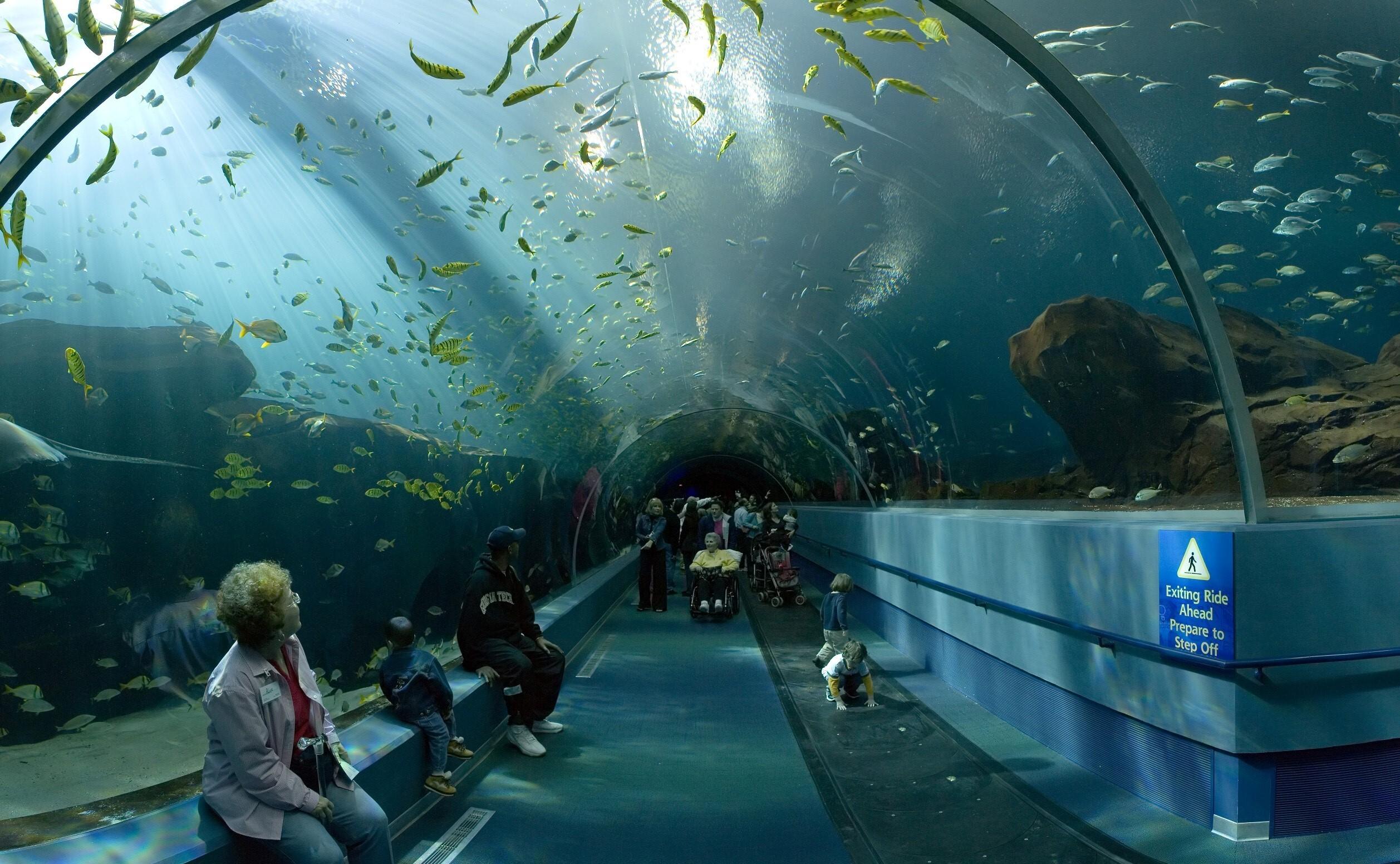 Awesome Georgia Aquarium Tourist Place In Atlanta Georgia United - Is georgia in the united states