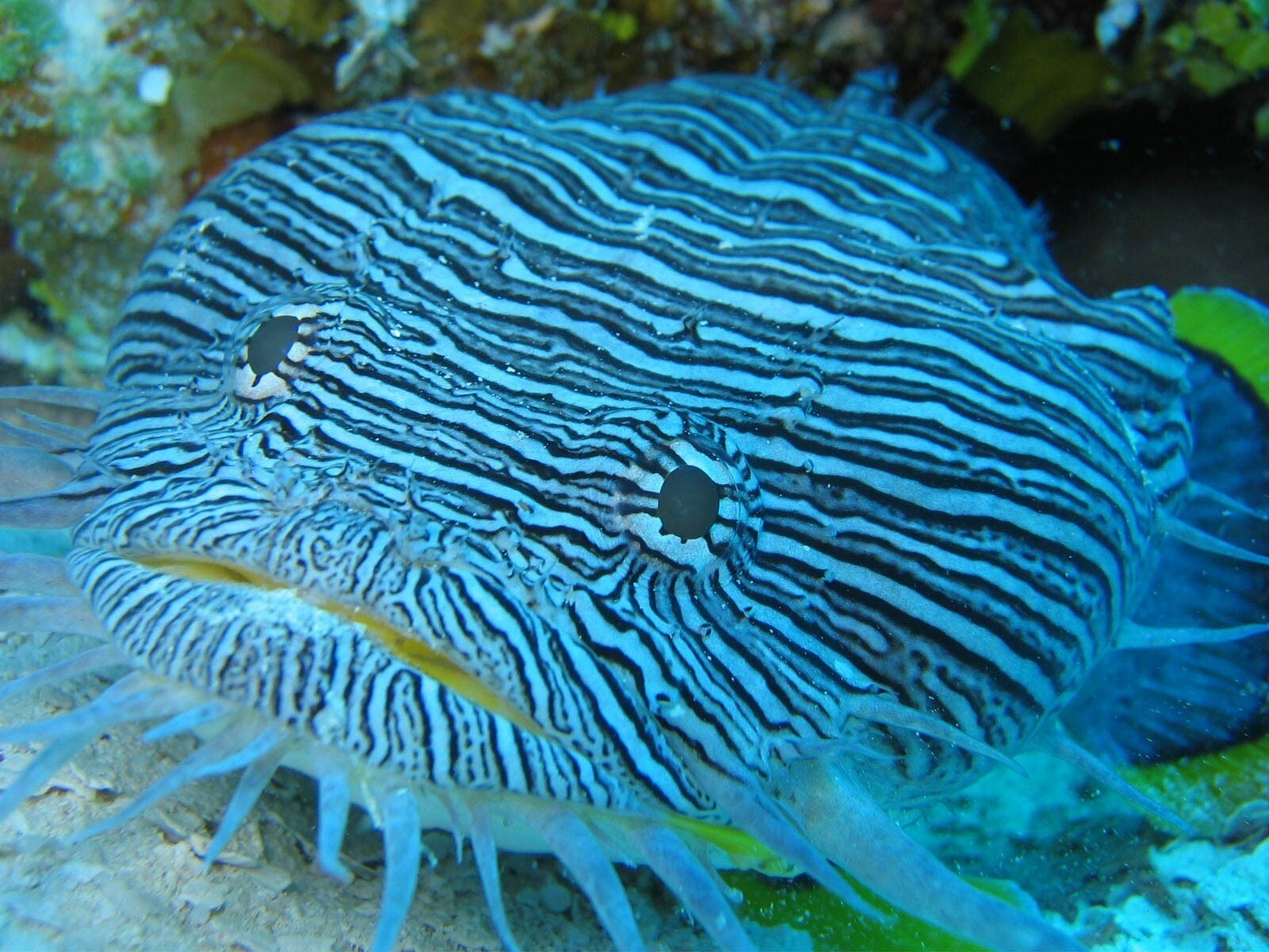Beautiful Sea Fish Wallpaper Hd Wallpapers