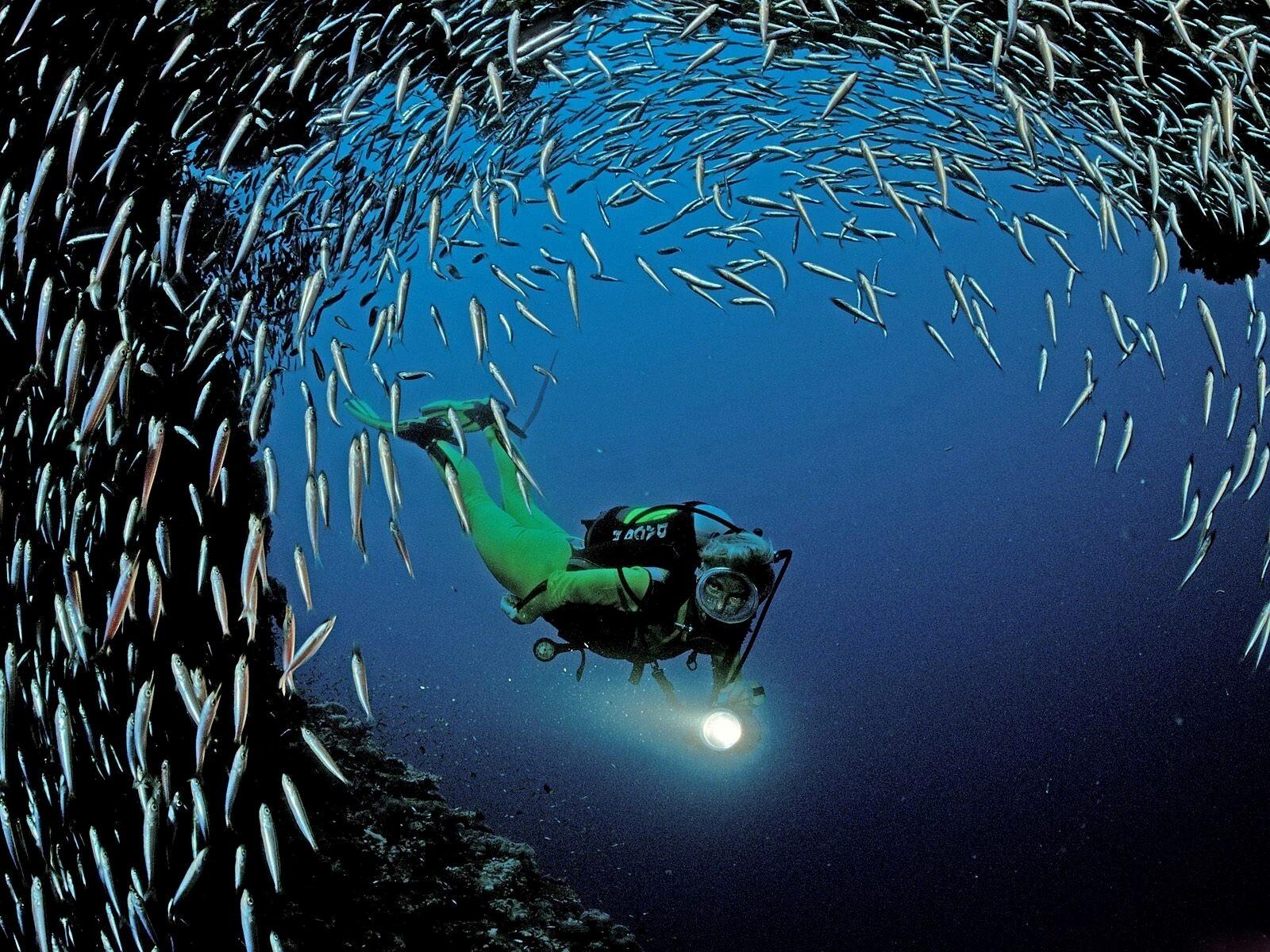 Beautiful Small Fish In Sea World HD Wallpapers