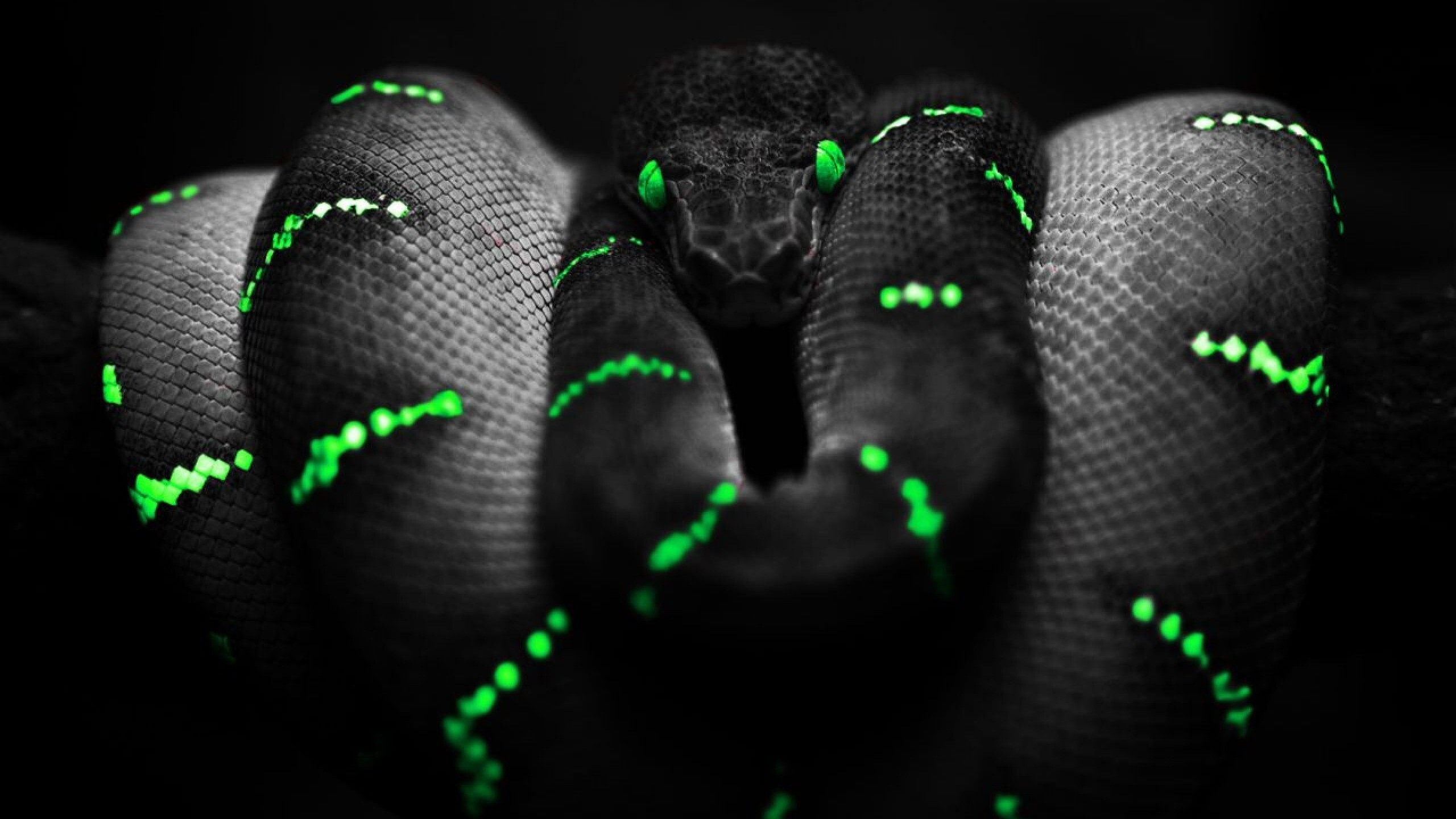 Black Scary Snake Wallpaper Hd Wallpapers