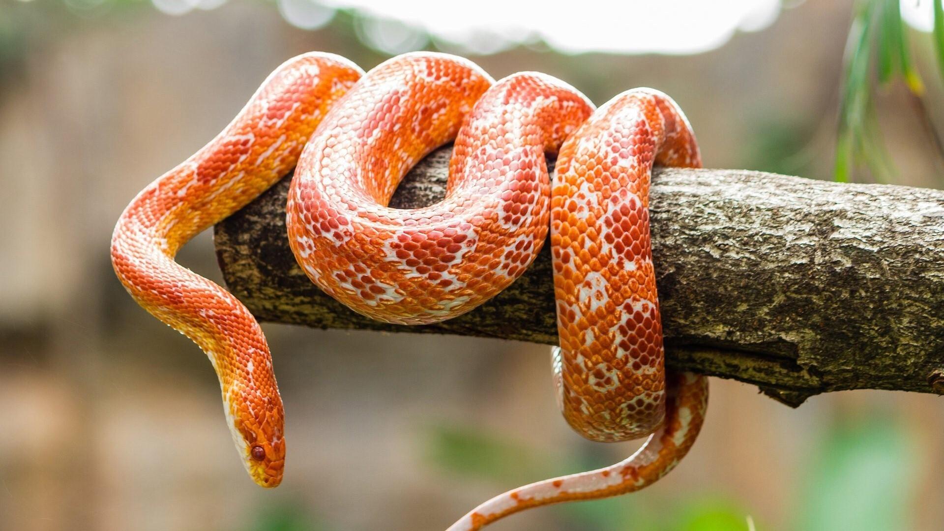 Orange Snake On Wooden HD Wallpapers