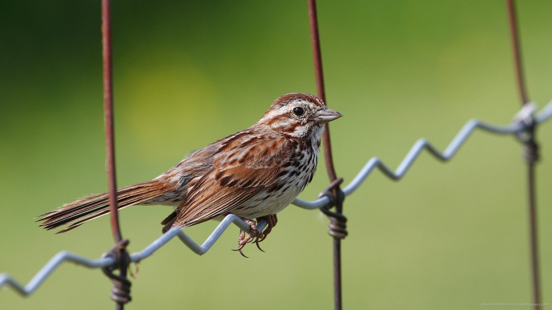 Beautiful Sparrow Bird Hd Images Hd Wallpapers