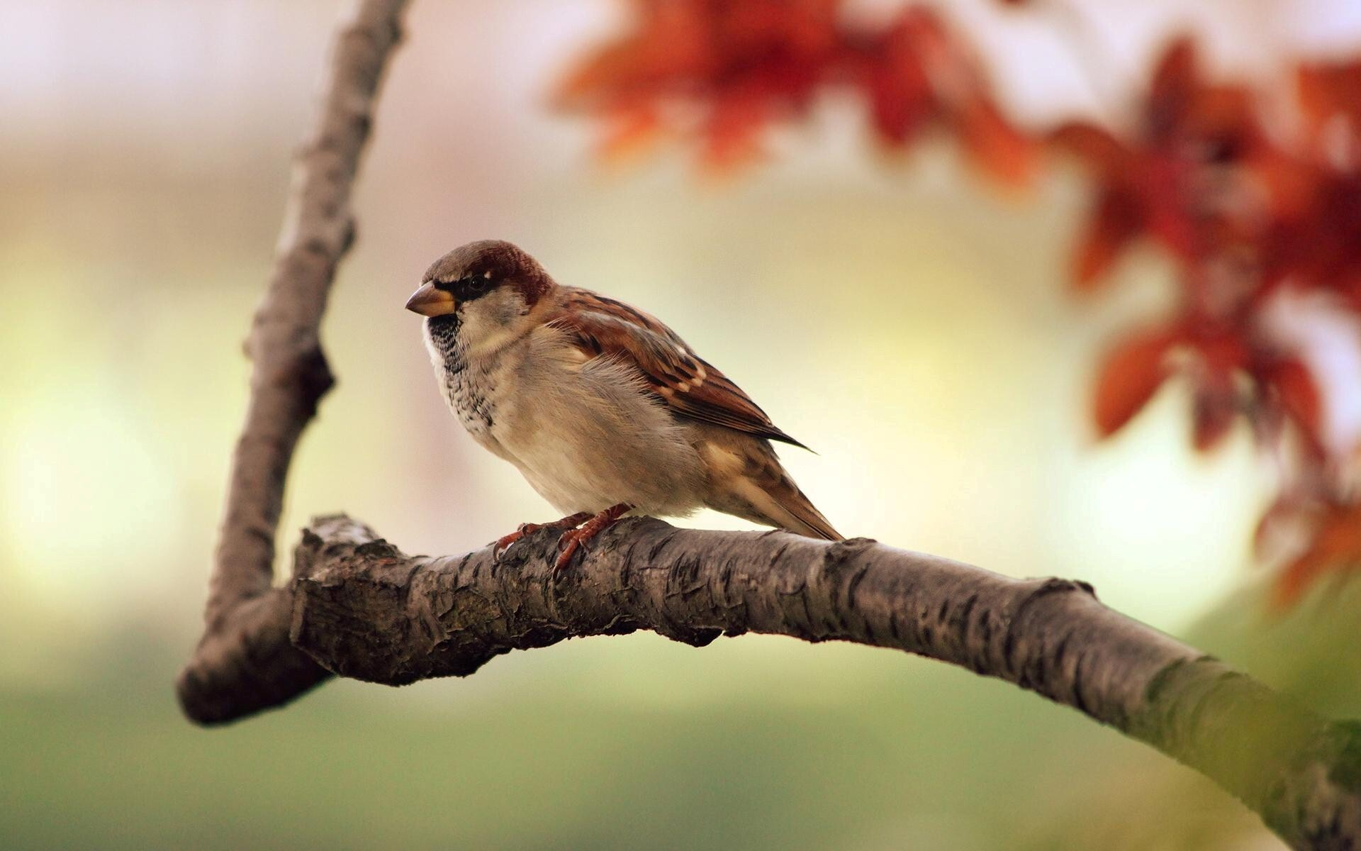 231 best images about Sparrows on Pinterest