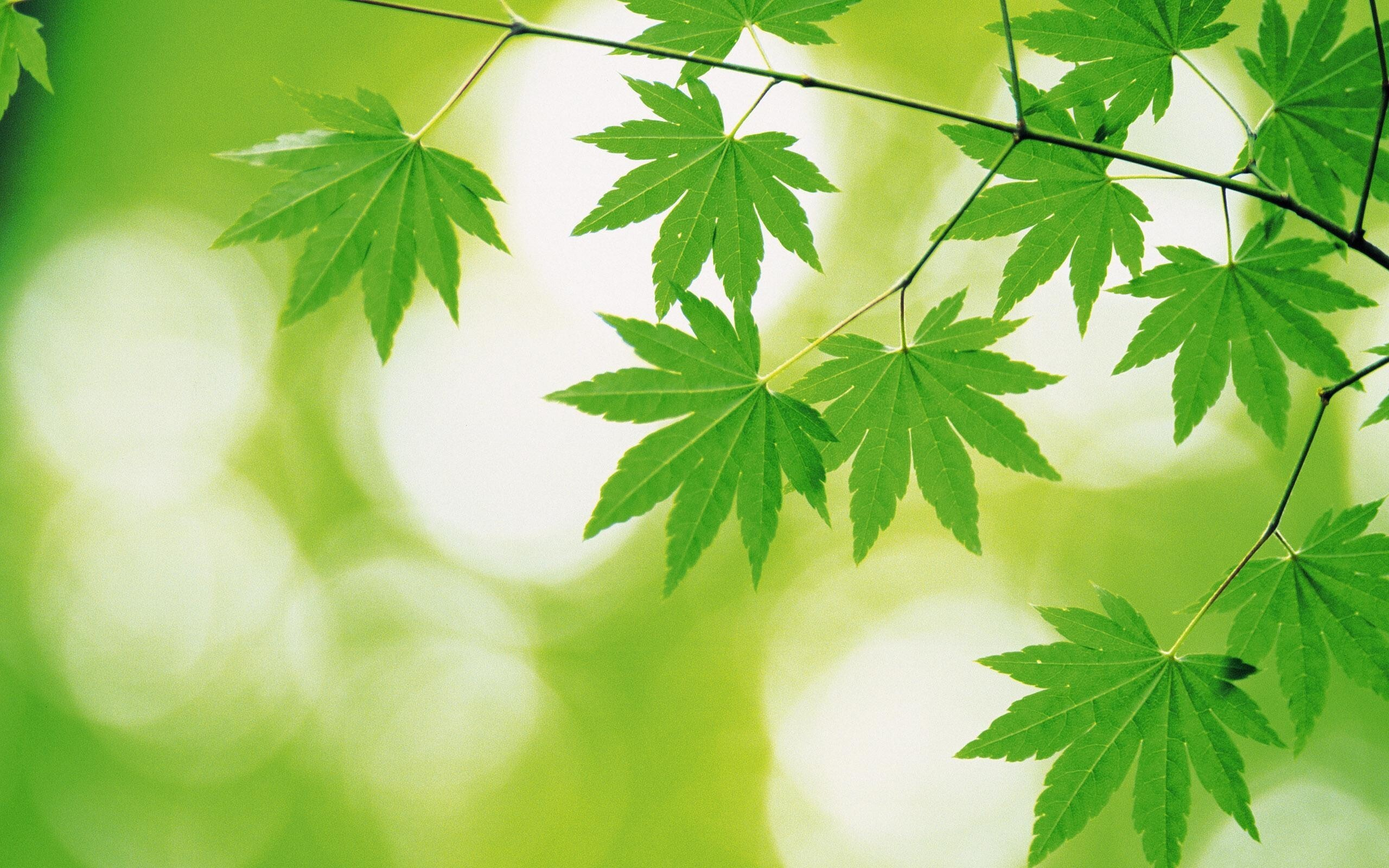 Beautiful Designs of Green Leaves | HD Wallpapers: www.hdnicewallpapers.com/Wallpaper-Download/Trees-and-Leaves...