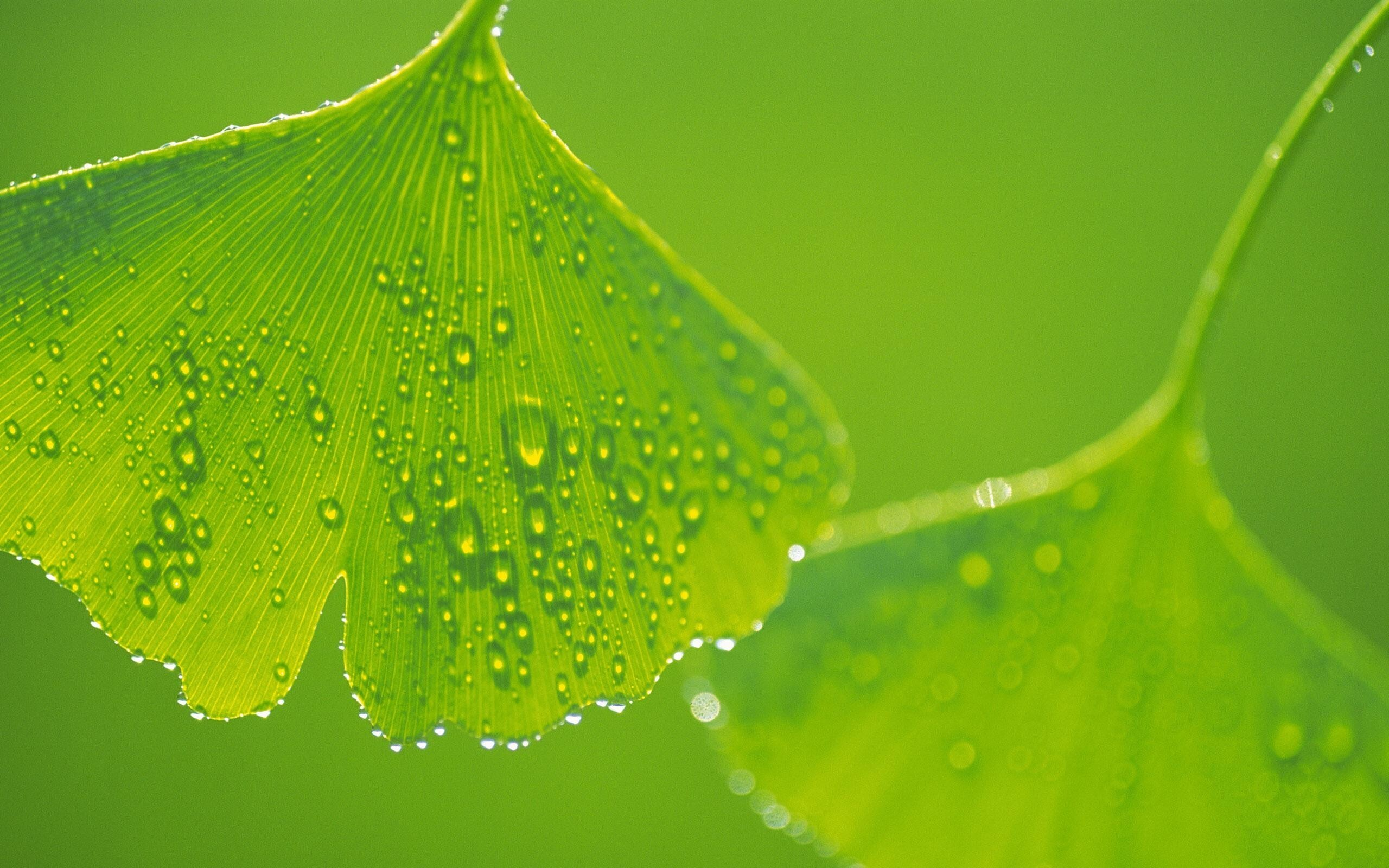 Beautiful Water Drops On Leaf Hd Wallpapers