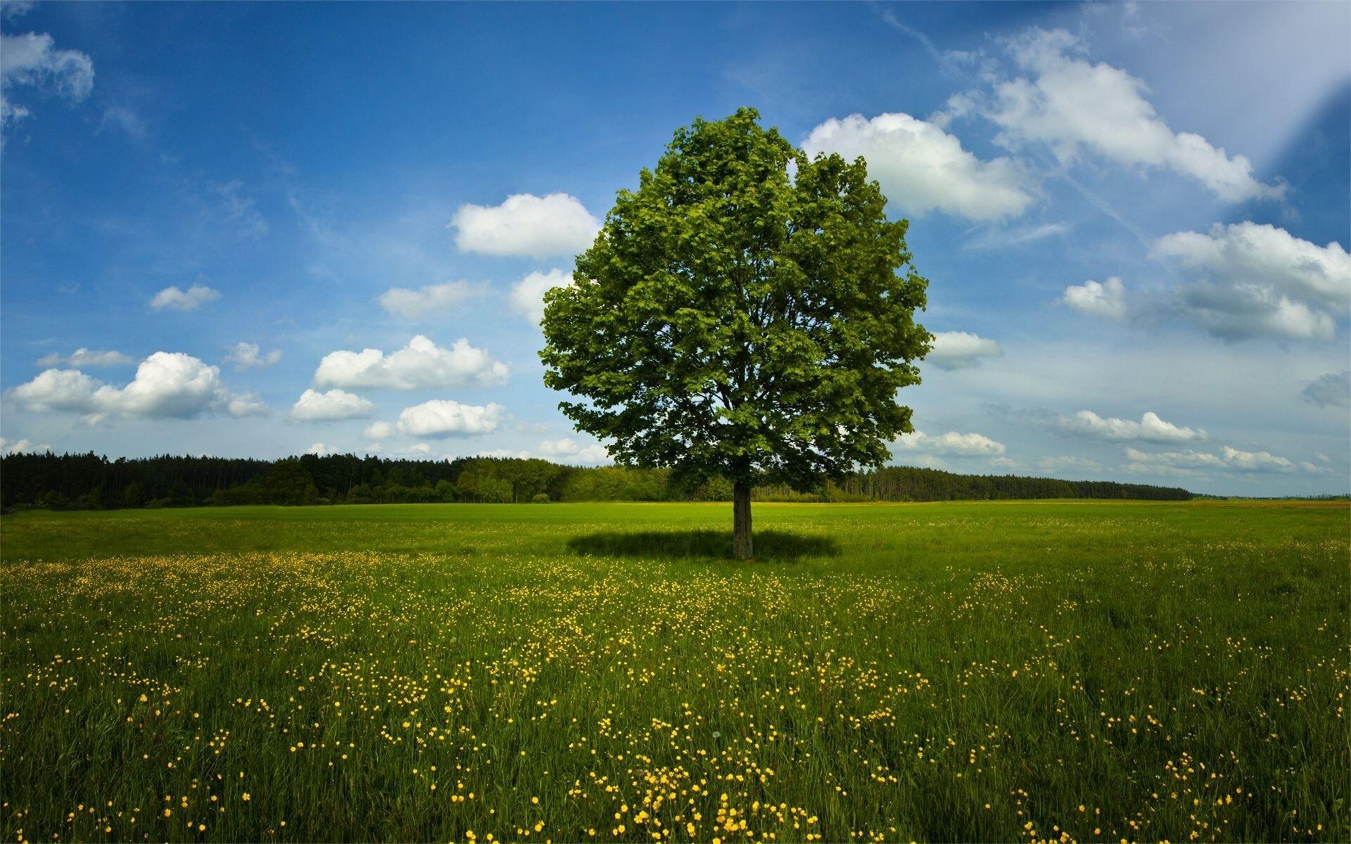 Big Tree In Farm Photo