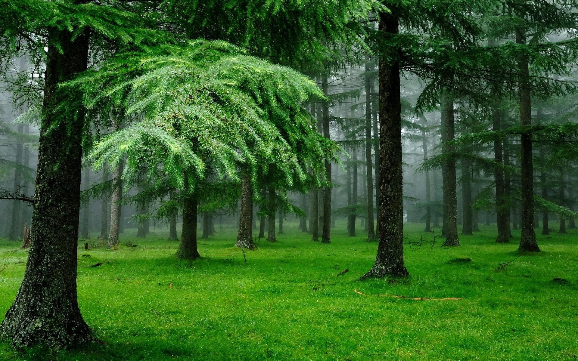 Download Green Trees In Jungle Fb Cover Facebook Cover Fb Covers Hub