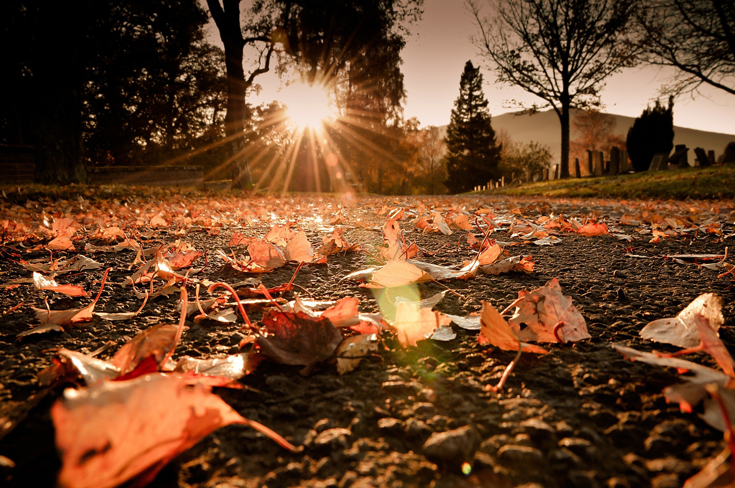 Dry Leaves on Road HD Wallpapers | HD Wallpapers