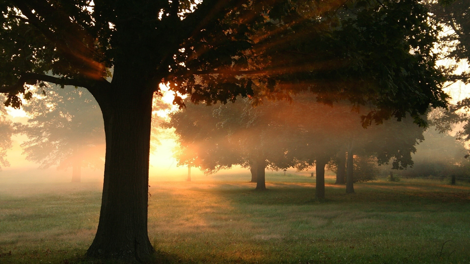 Trees View In Sunrise Wallpaper