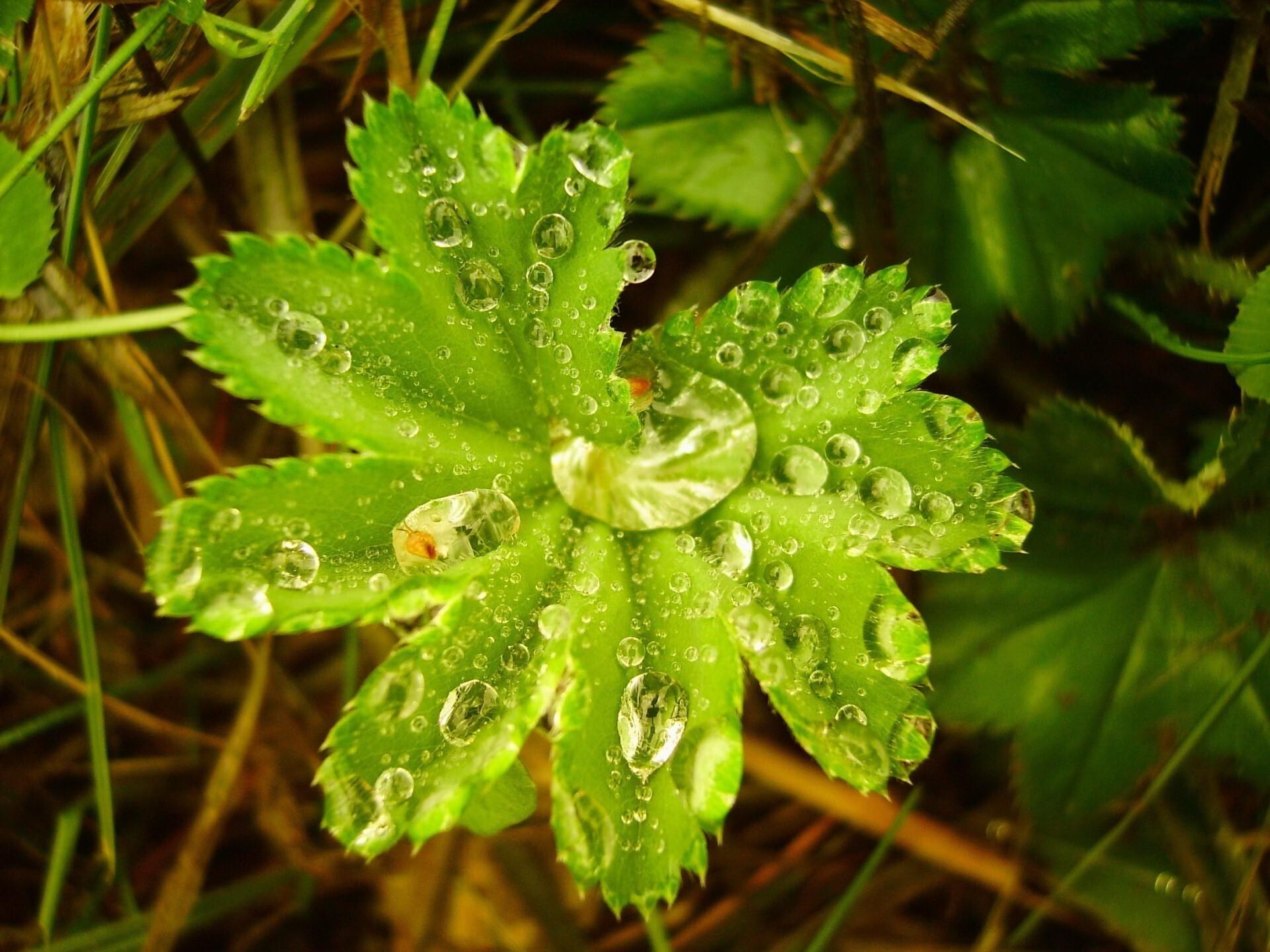 Water On Beautiful Tree Leaf