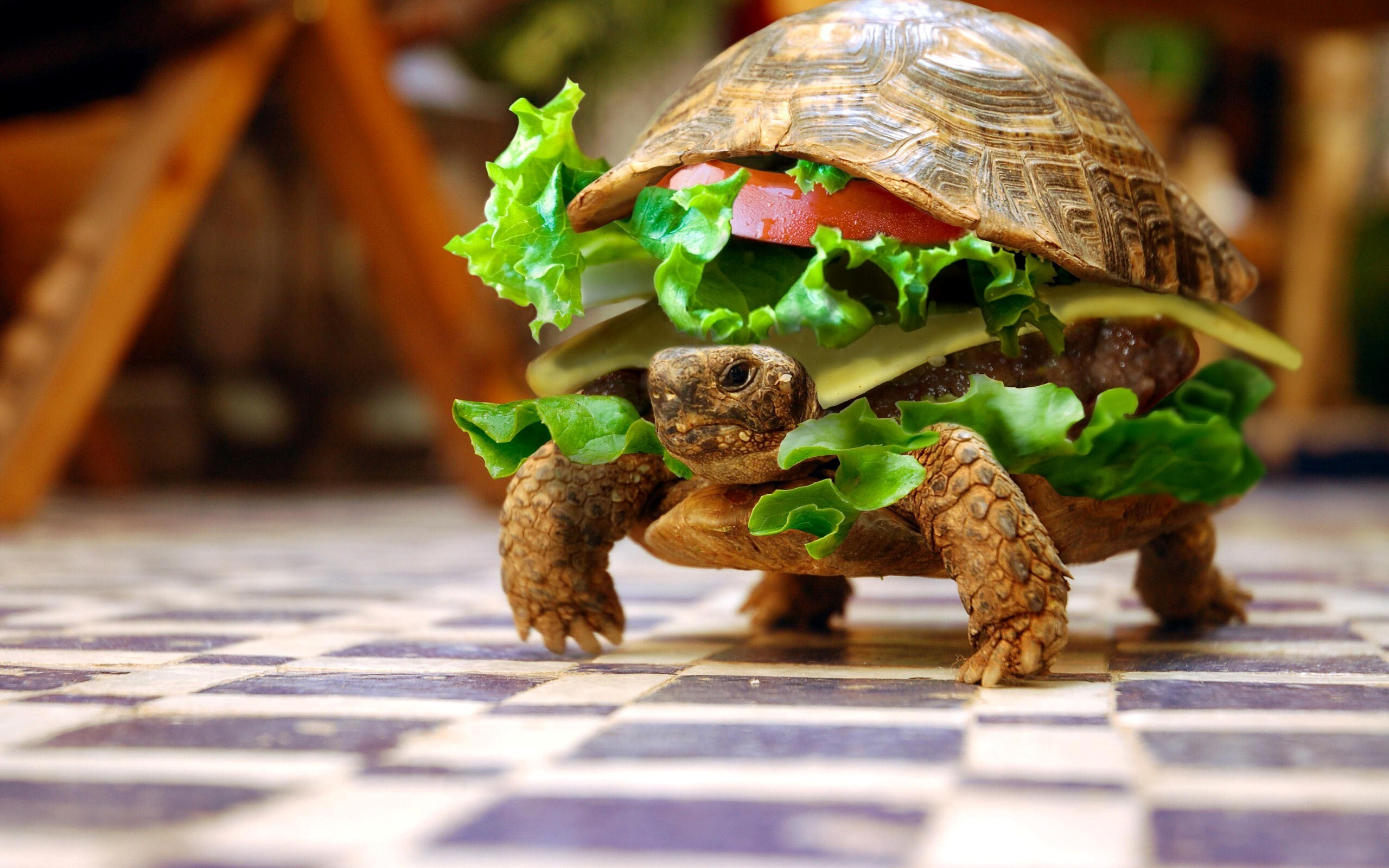 Good Wallpaper High Quality Burger - Funny_Burger_Type_Turtle_Photo  Picture_552947.jpg