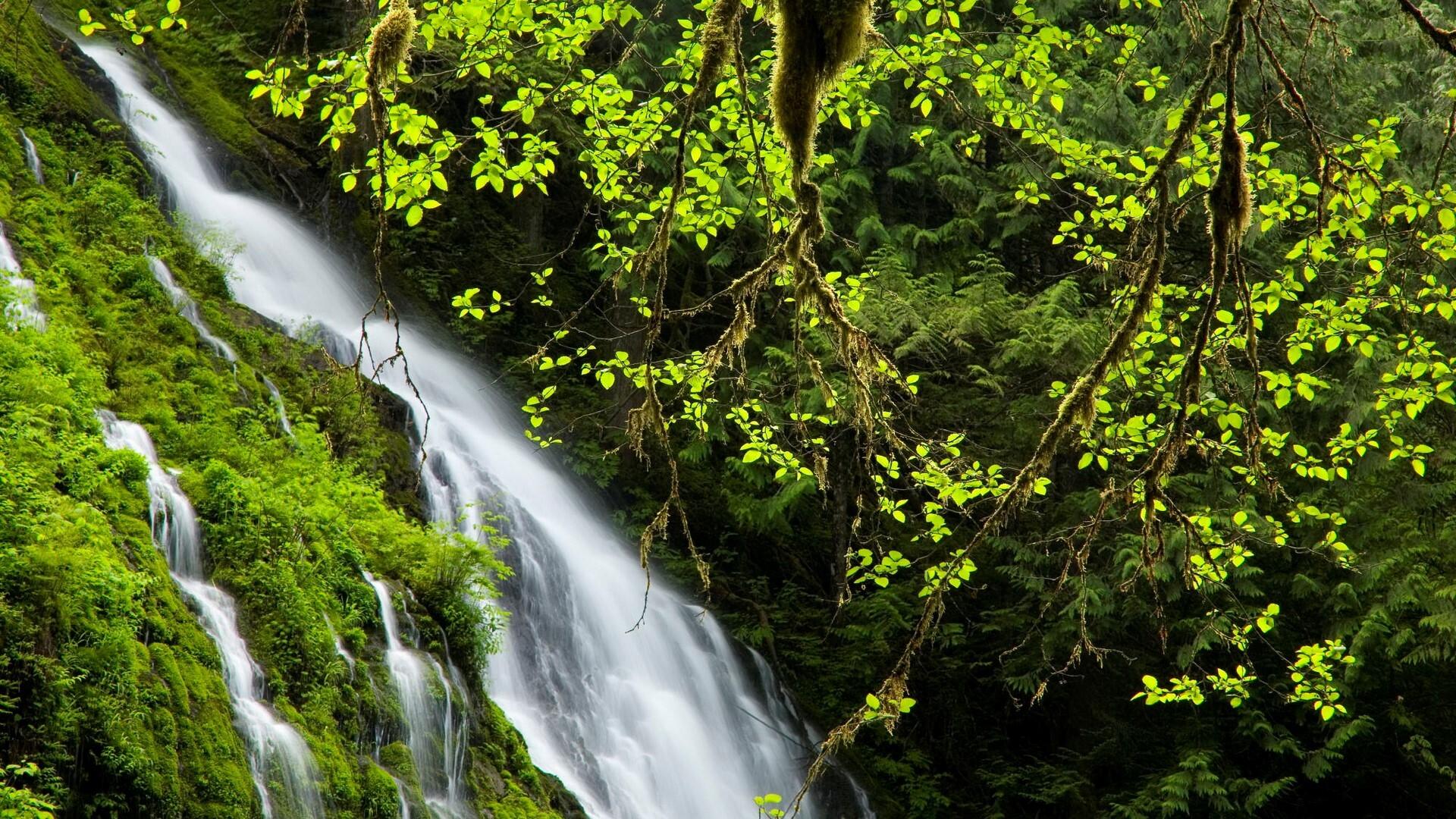Nice HD Waterfall In Green Jungle Wallpaper
