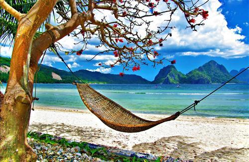 Amazing Cute Hammock Beach Image