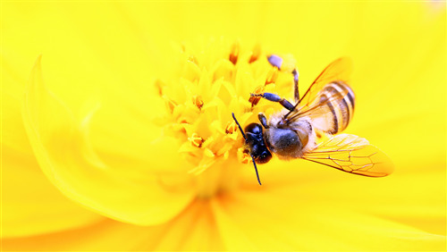 Yellow Flower Smell Bee Superb 5K Wallpaper