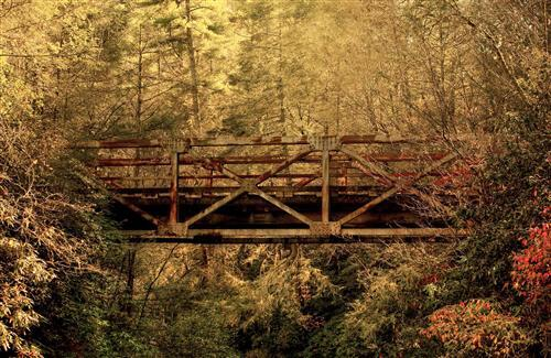 Old Bridge in Jungle