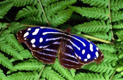 Blue and White Butterfly