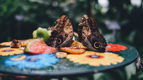 Butterflies on Fruit Table 4K Wallpaper