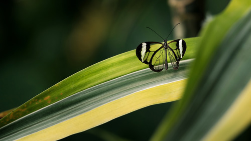 Butterfly in Green Leaf 5K Wallpaper