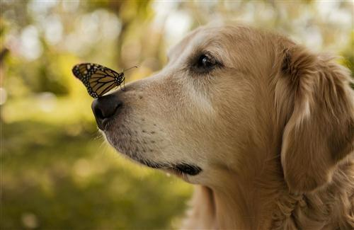 Butterfly on Dog Nose Photo