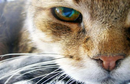 Beautiful Cat Eye
