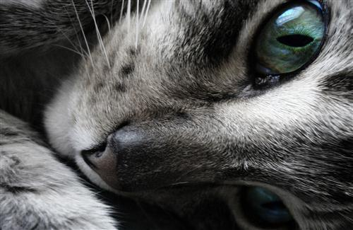 Beautiful Cat Eye Pic