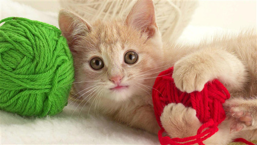 Beautiful Cat Playing Pic Download