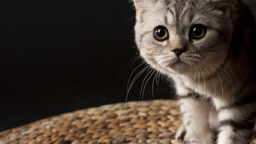 Beautiful Little Cat HD Wallpaper